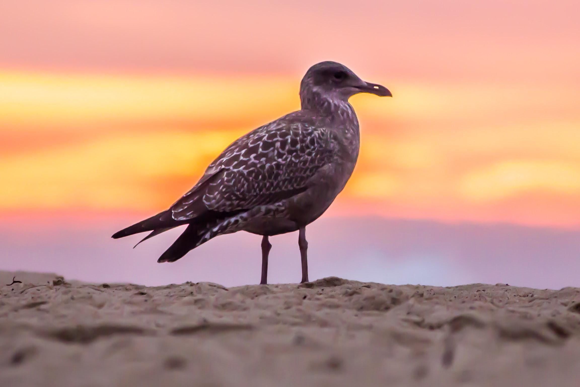 Grey bird on white beach sand photo