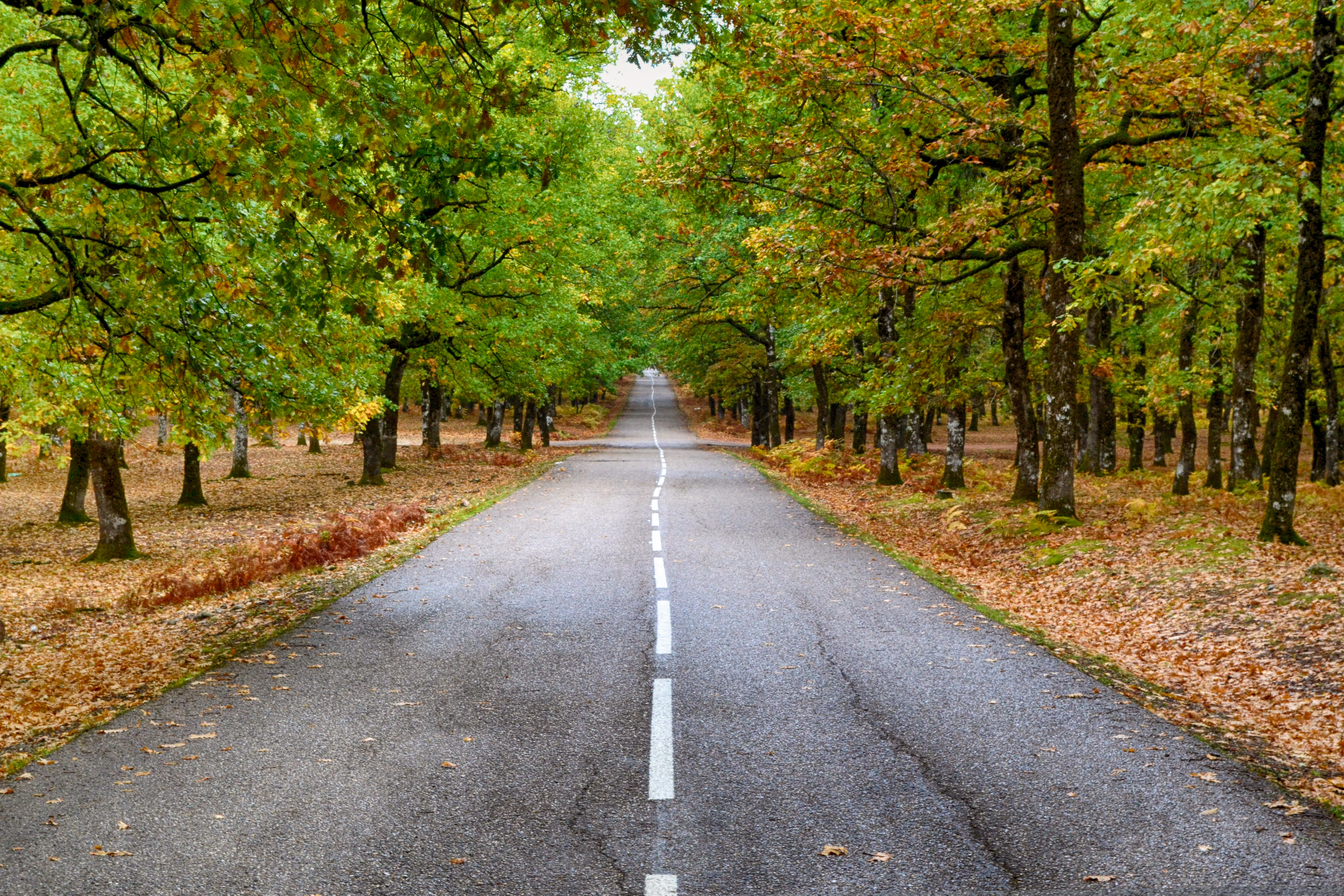 Grey Concrete Road in the Middle of Dried Leaves, Asphalt, Leaves, Way, Trees, HQ Photo