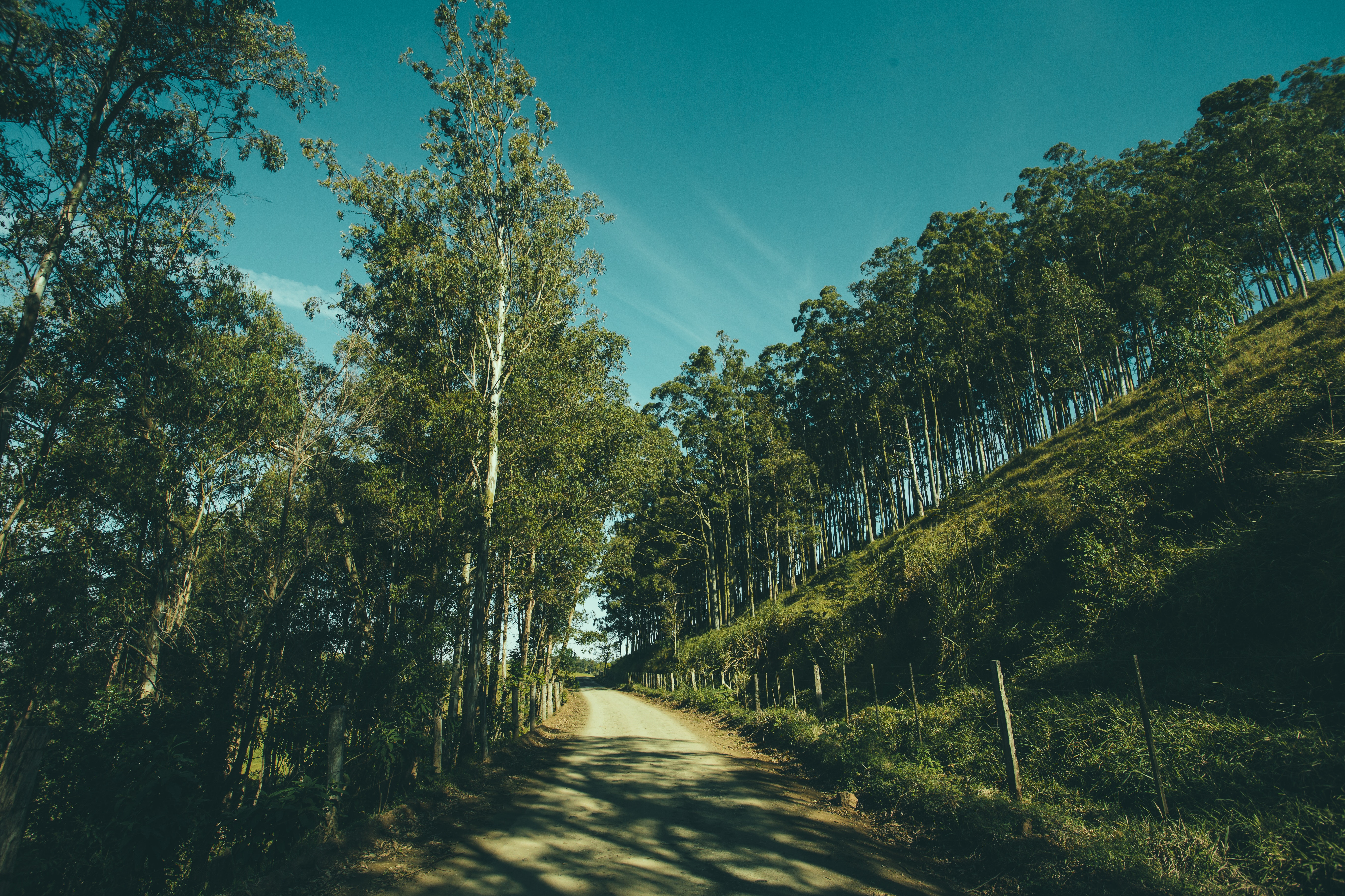 Grey Pathway in Middle on Green Trees and Grass Fields during Daytime, Adventure, Mountain, Trees, Travel, HQ Photo