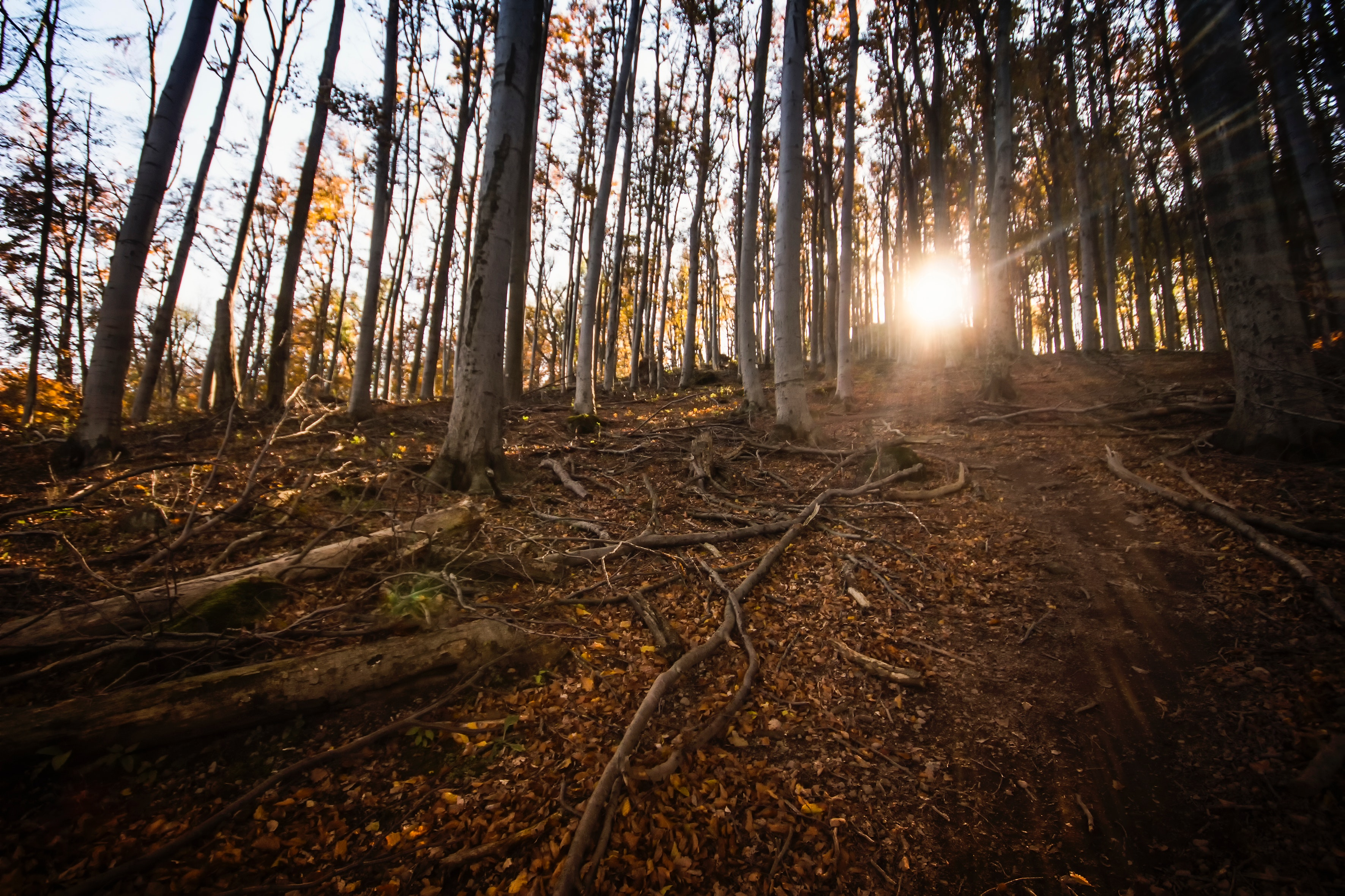 Grey tree during sunrise photo