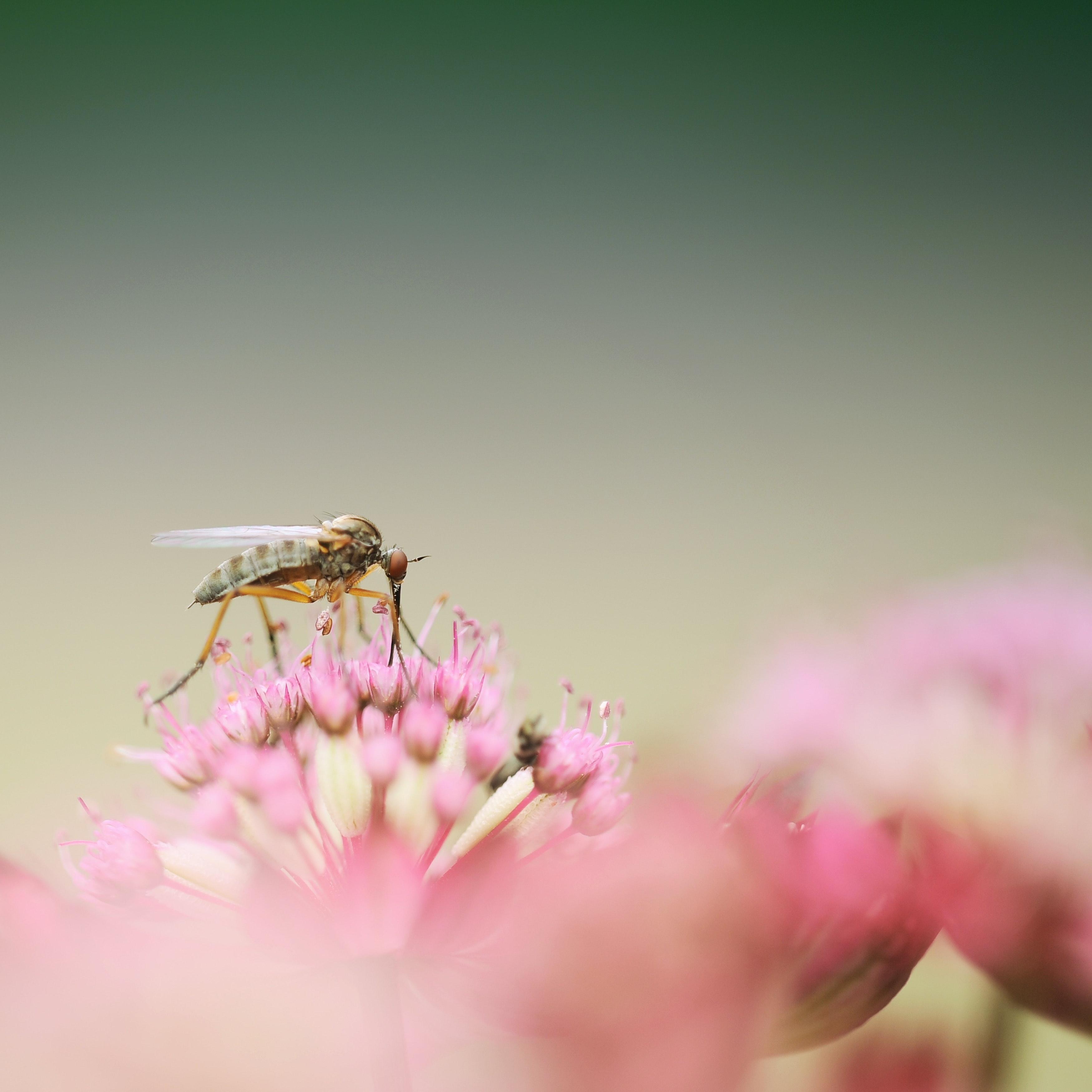 Grey weevil photo