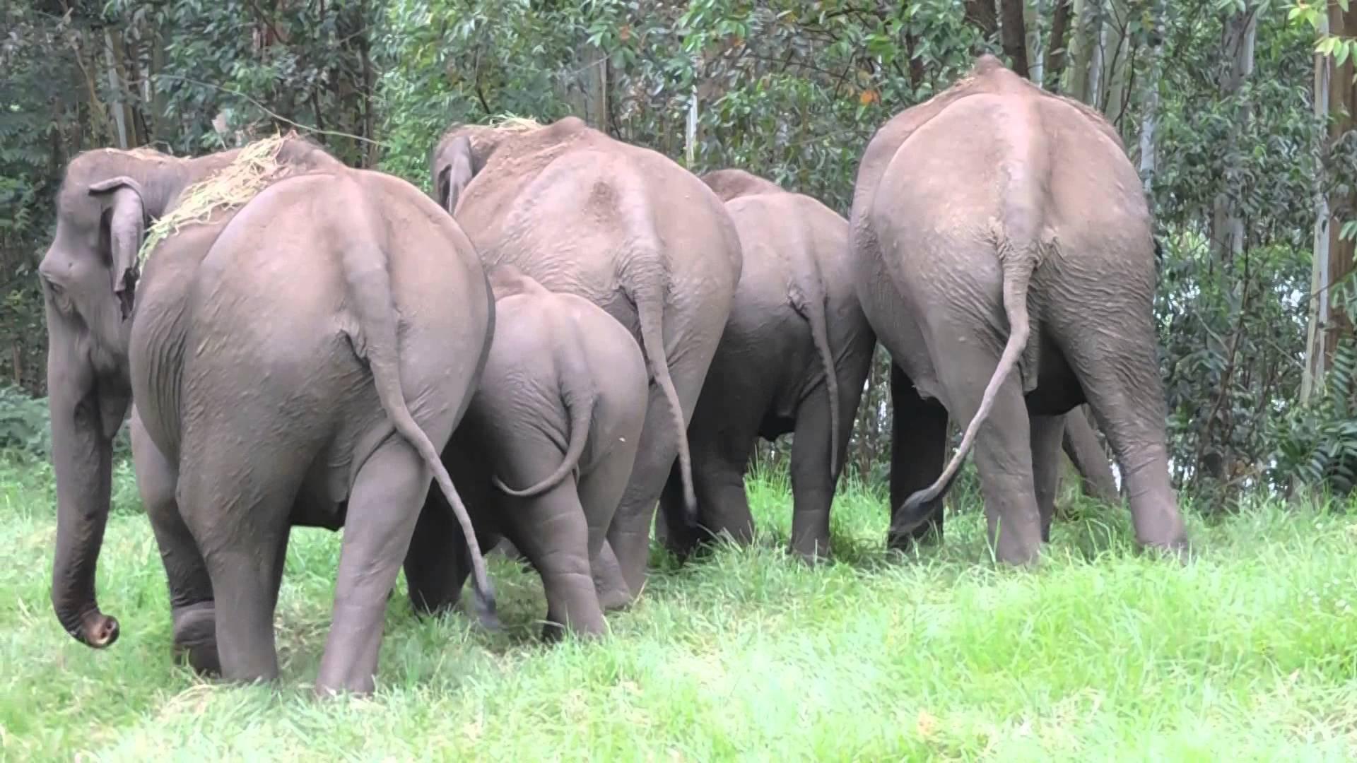 wild elephant group - YouTube
