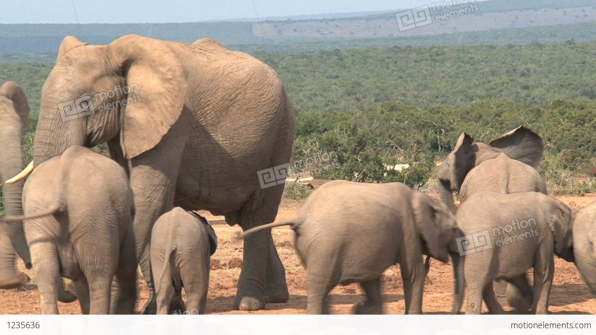 Group Little Elephants Stock video footage | 1235636