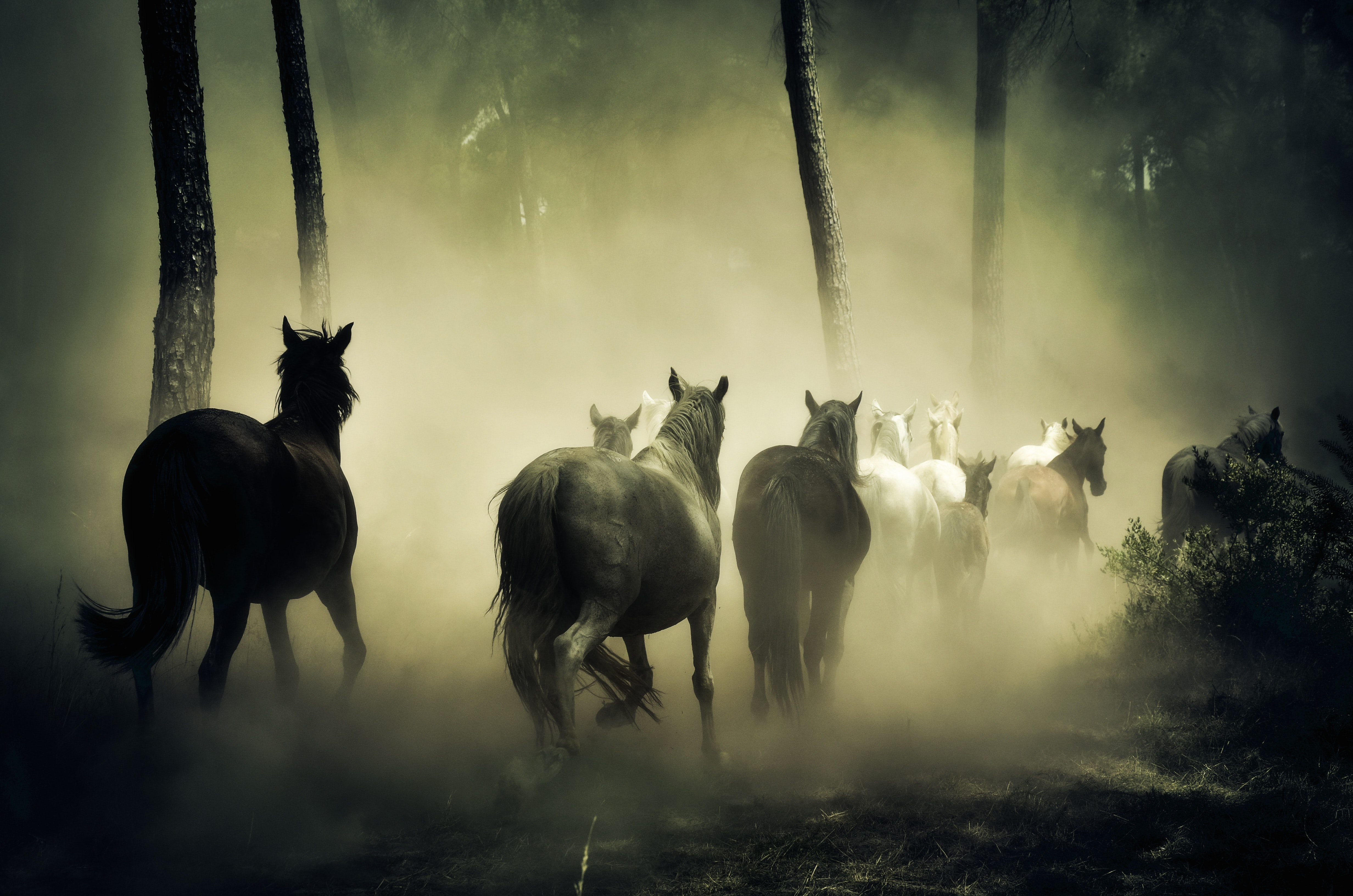 Group of Horse Running, Mist, Outdoors, Wildlife, Woods, HQ Photo