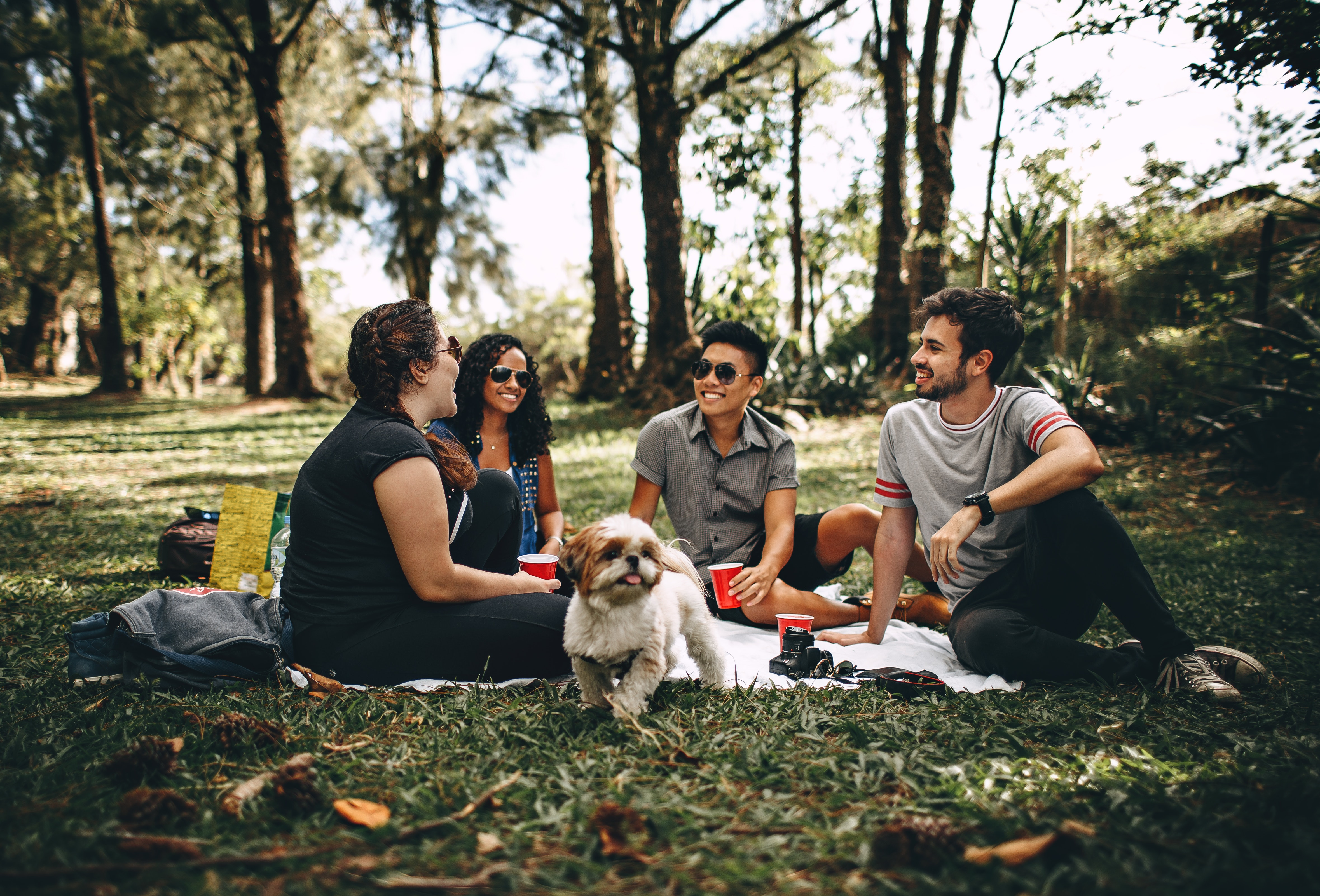Group of People Sitting on White Mat on Grass Field, Chatting, Picnic, Woods, Women, HQ Photo
