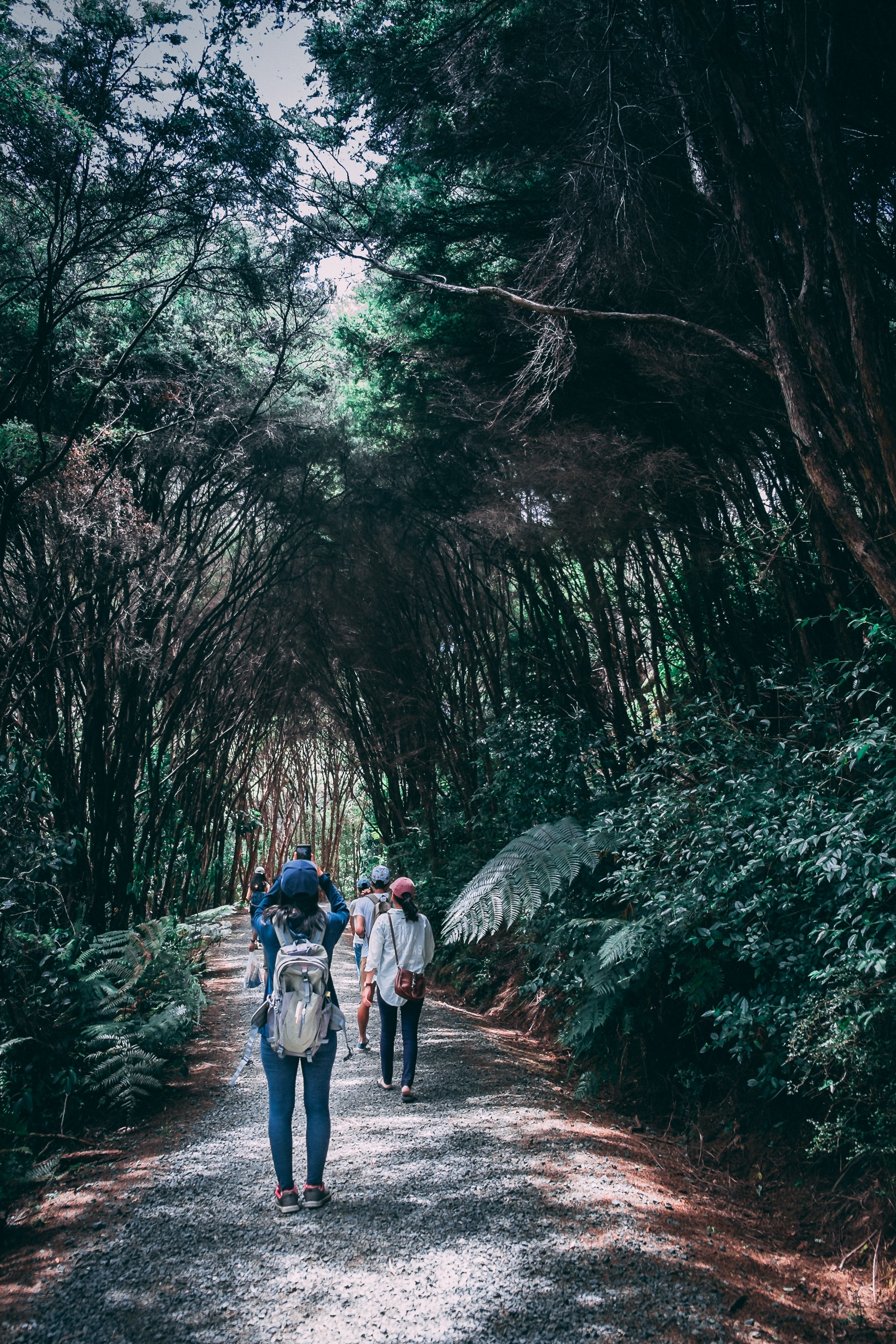 Group of people walking in forest photo