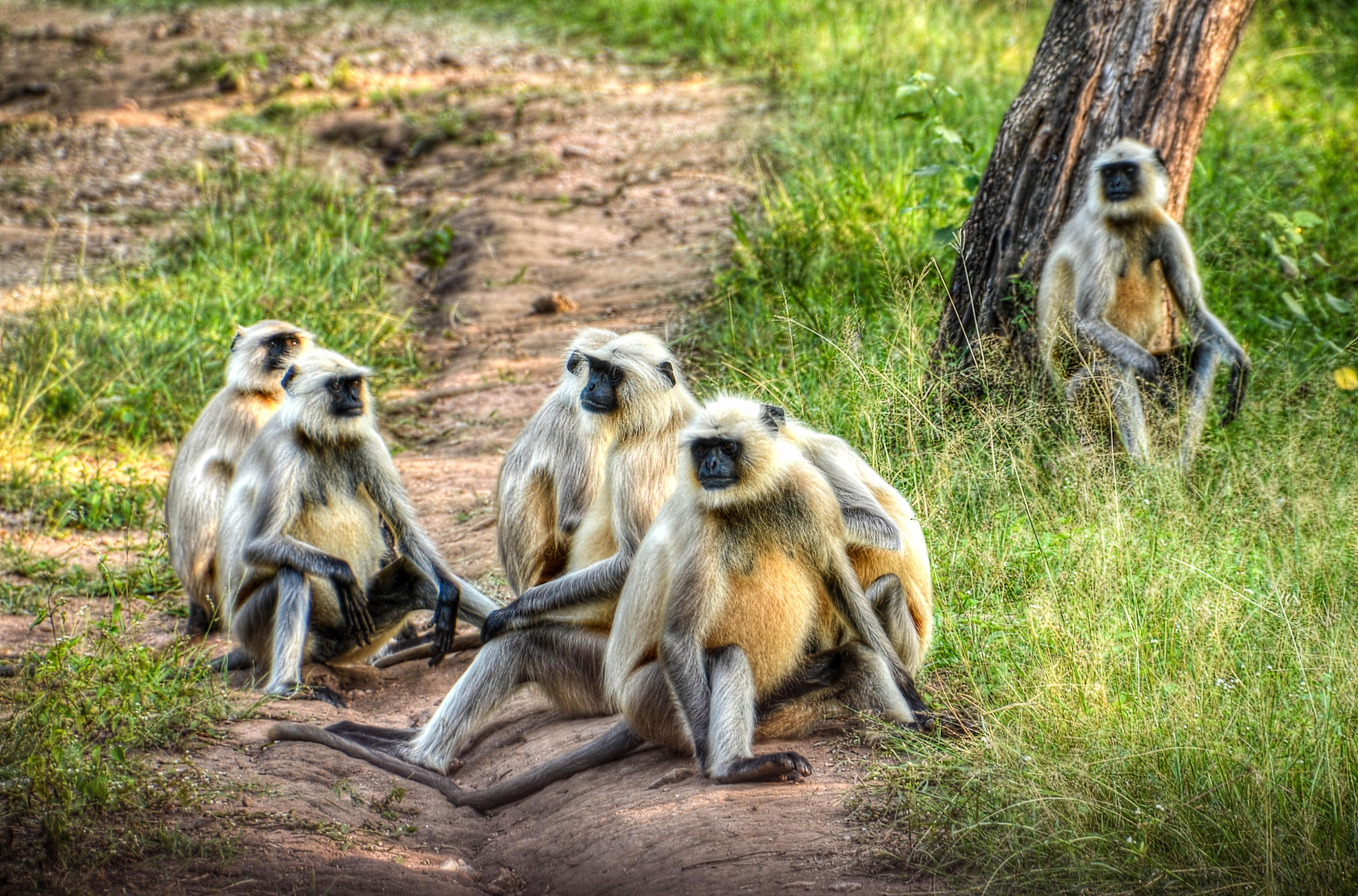 Group of primates on ground photo