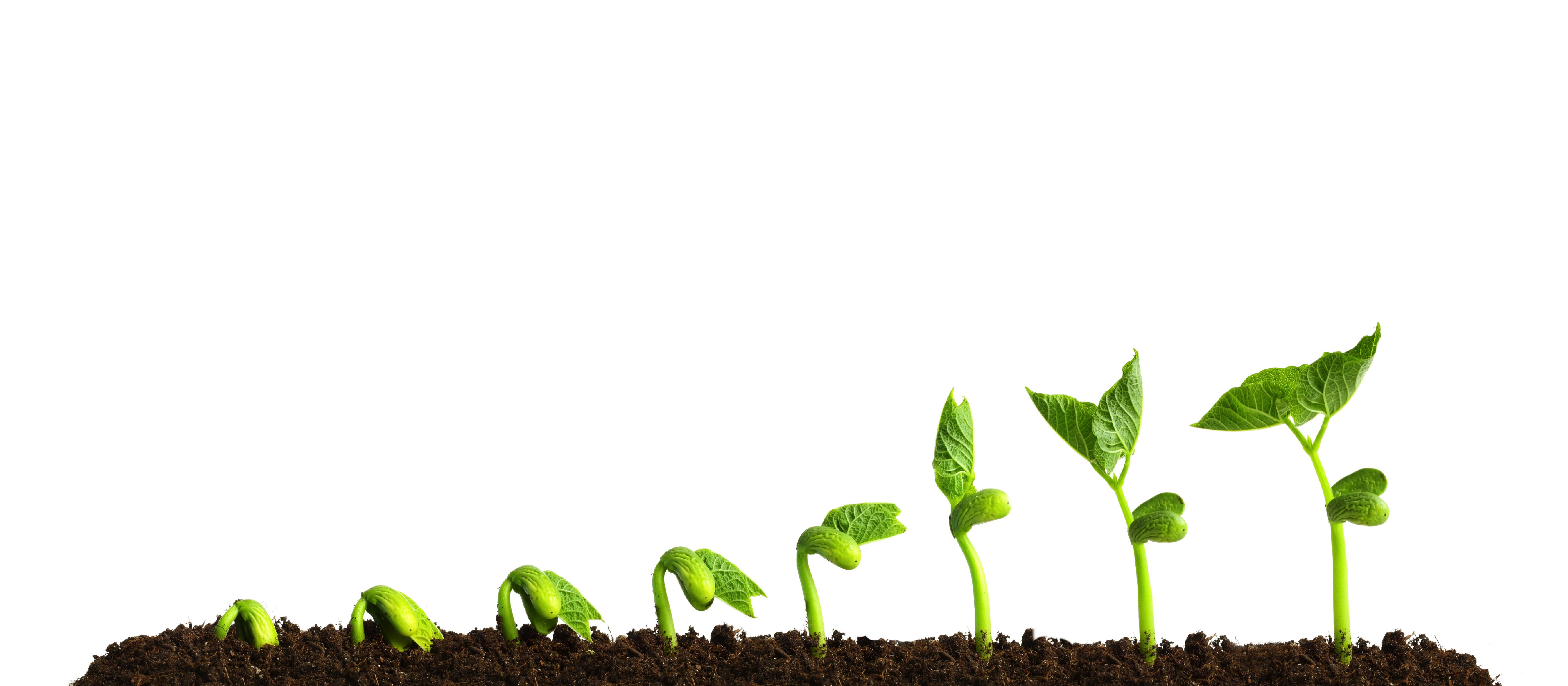plant growing v2 - Mentio