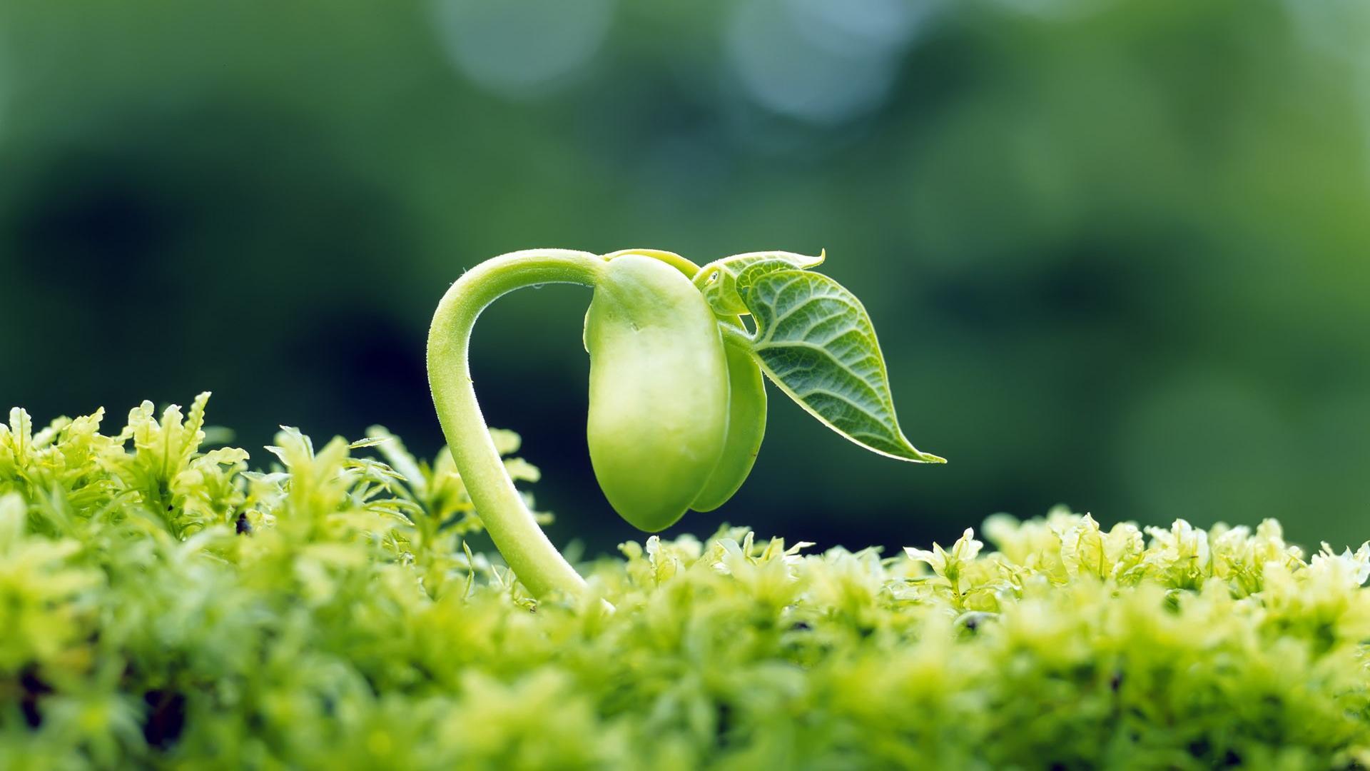 Growing plant wallpaper   (41387)