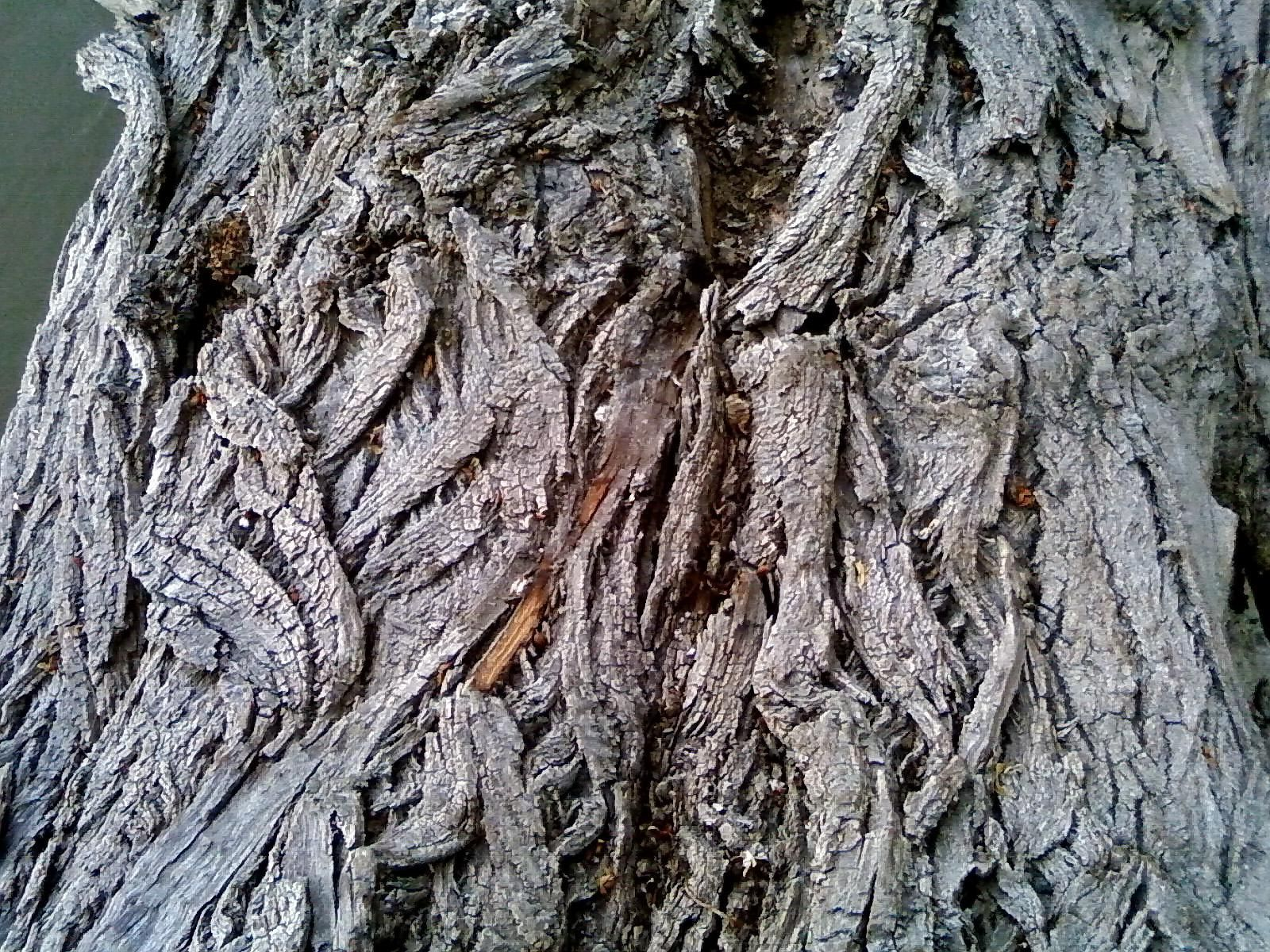 Free picture: old, tree bark, up-close, texture