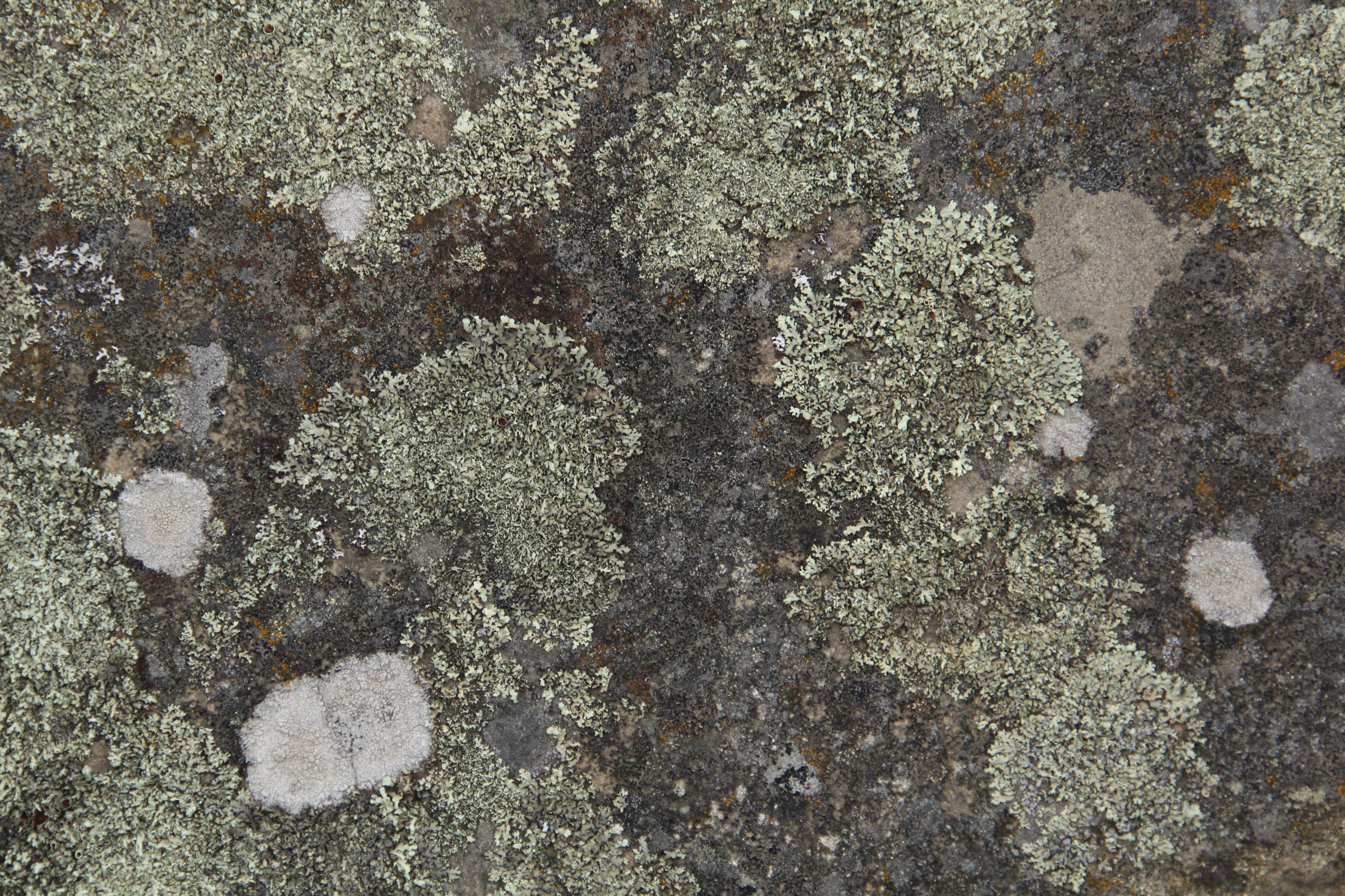 grunge texture rock stone algae lichen natural photo - TextureX ...