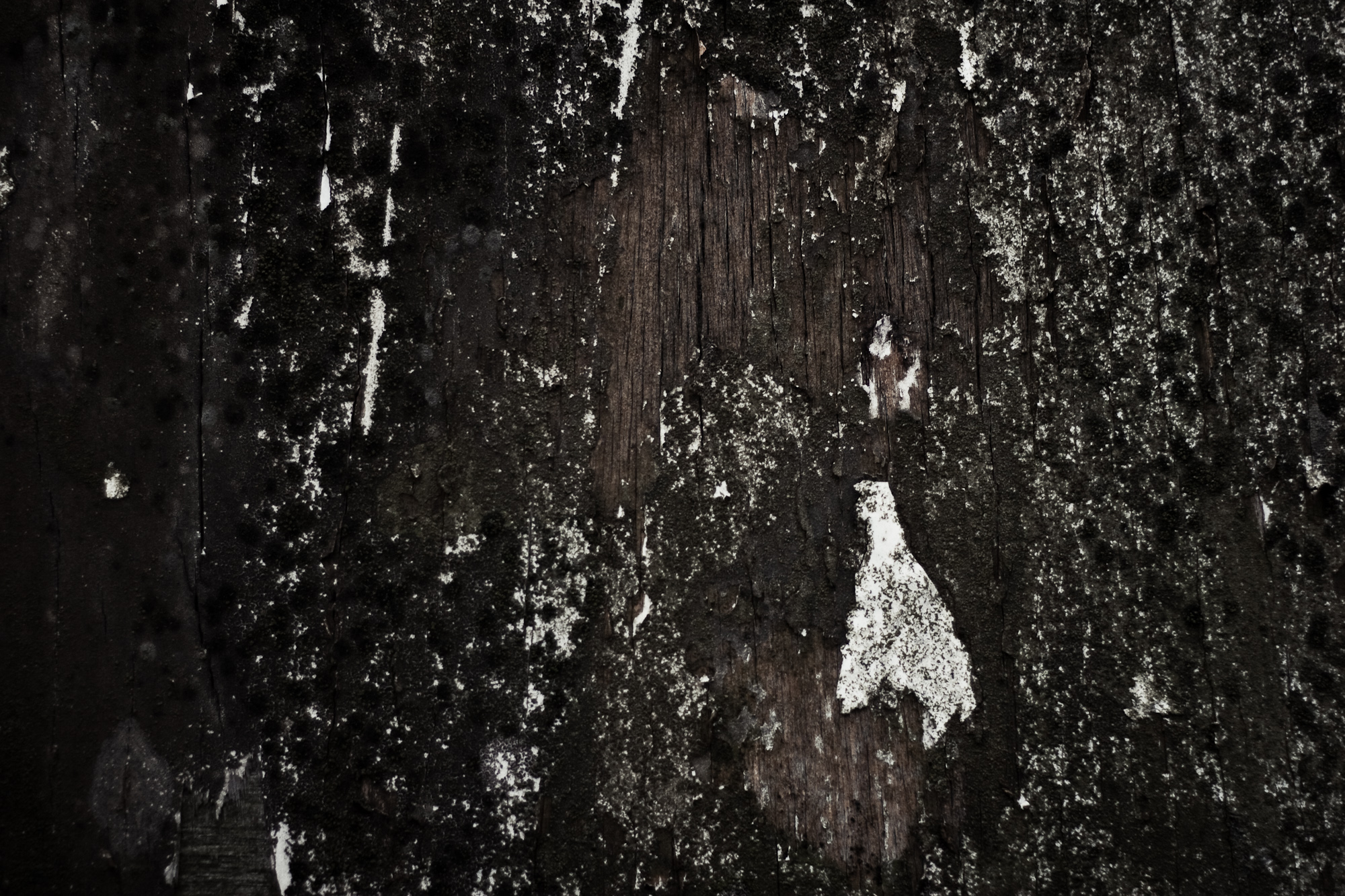 Grunge Wood Texture, Wooden, Gray, Wood, Tree, HQ Photo