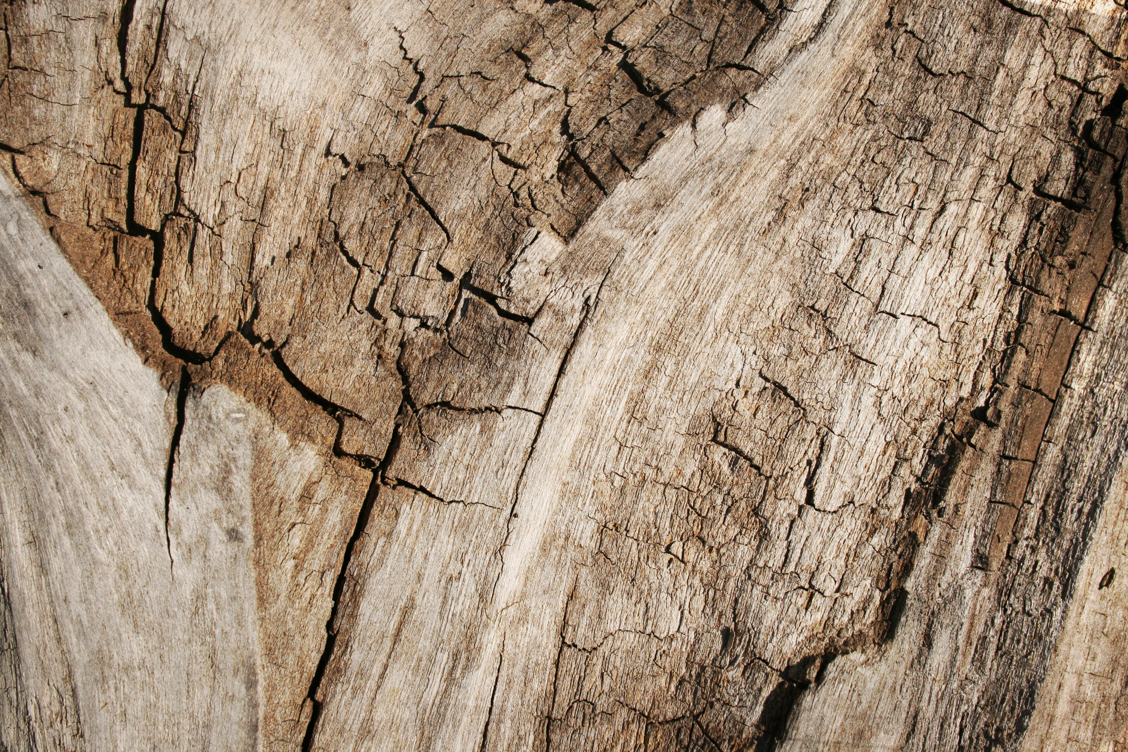 Grungy Cracked Wood, Backdrop, Rough, Material, Natural, HQ Photo