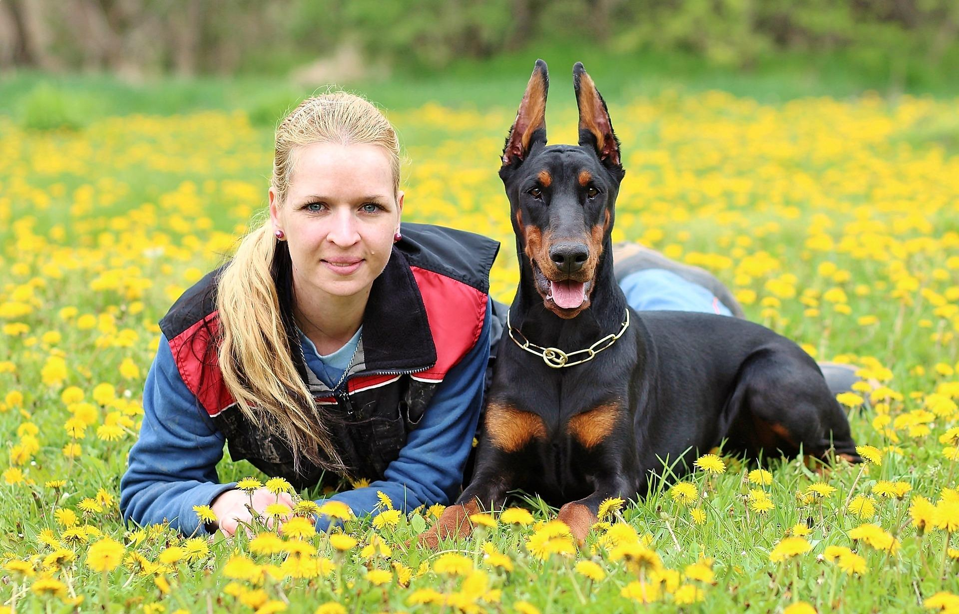 Top 10 Best Guard Dogs For Security