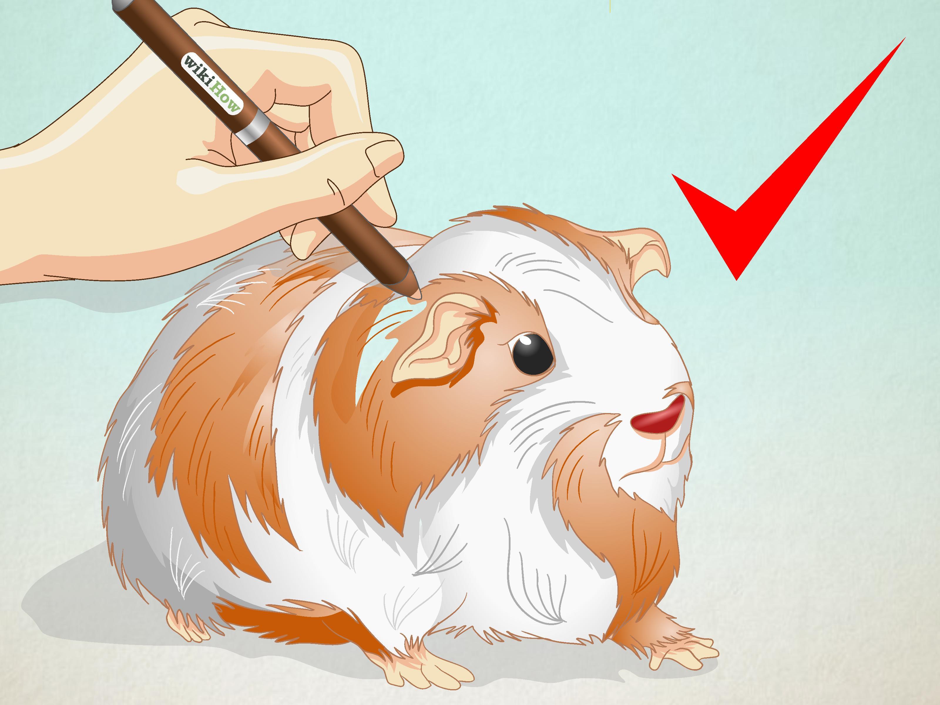Free Photo Guinea Pig Drawing Animal Art Drawing Free Download Jooinn