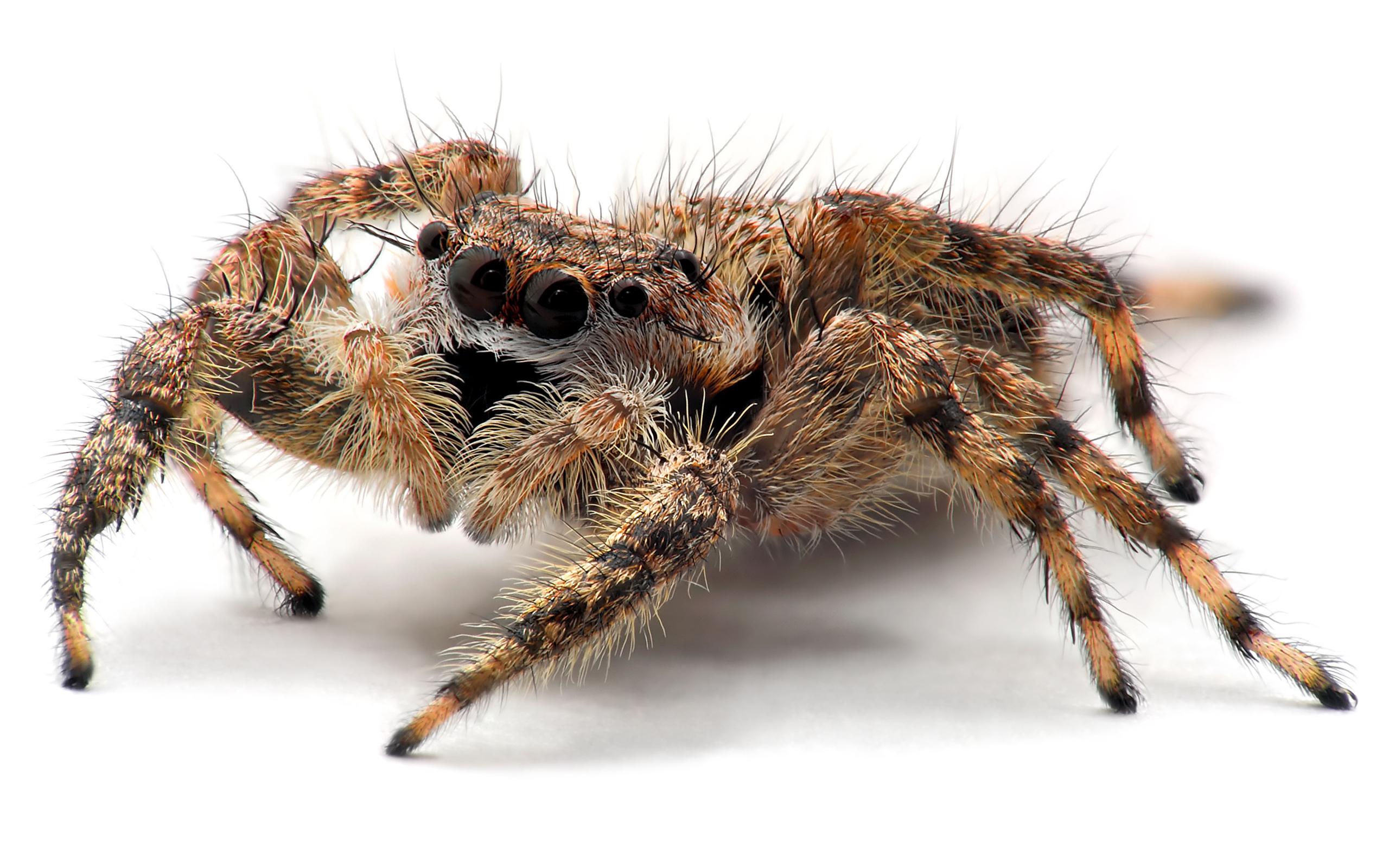 Big Creepy Hairy Spider | ANIMAL