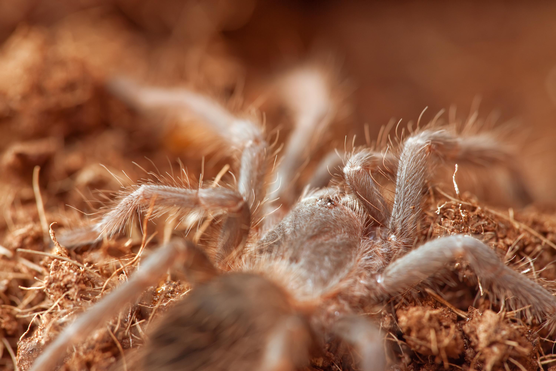 Hairy spider photo