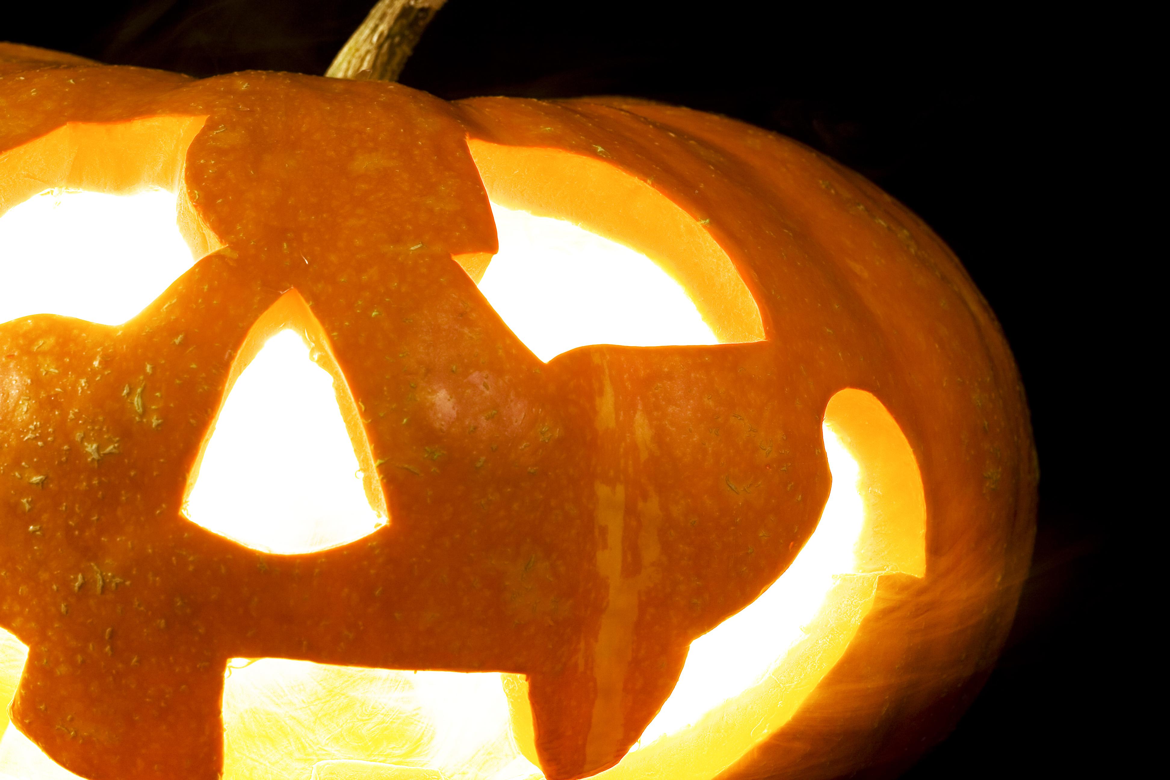 halloween pumpkin, Autumn, Season, Orange, Pumpkin, HQ Photo
