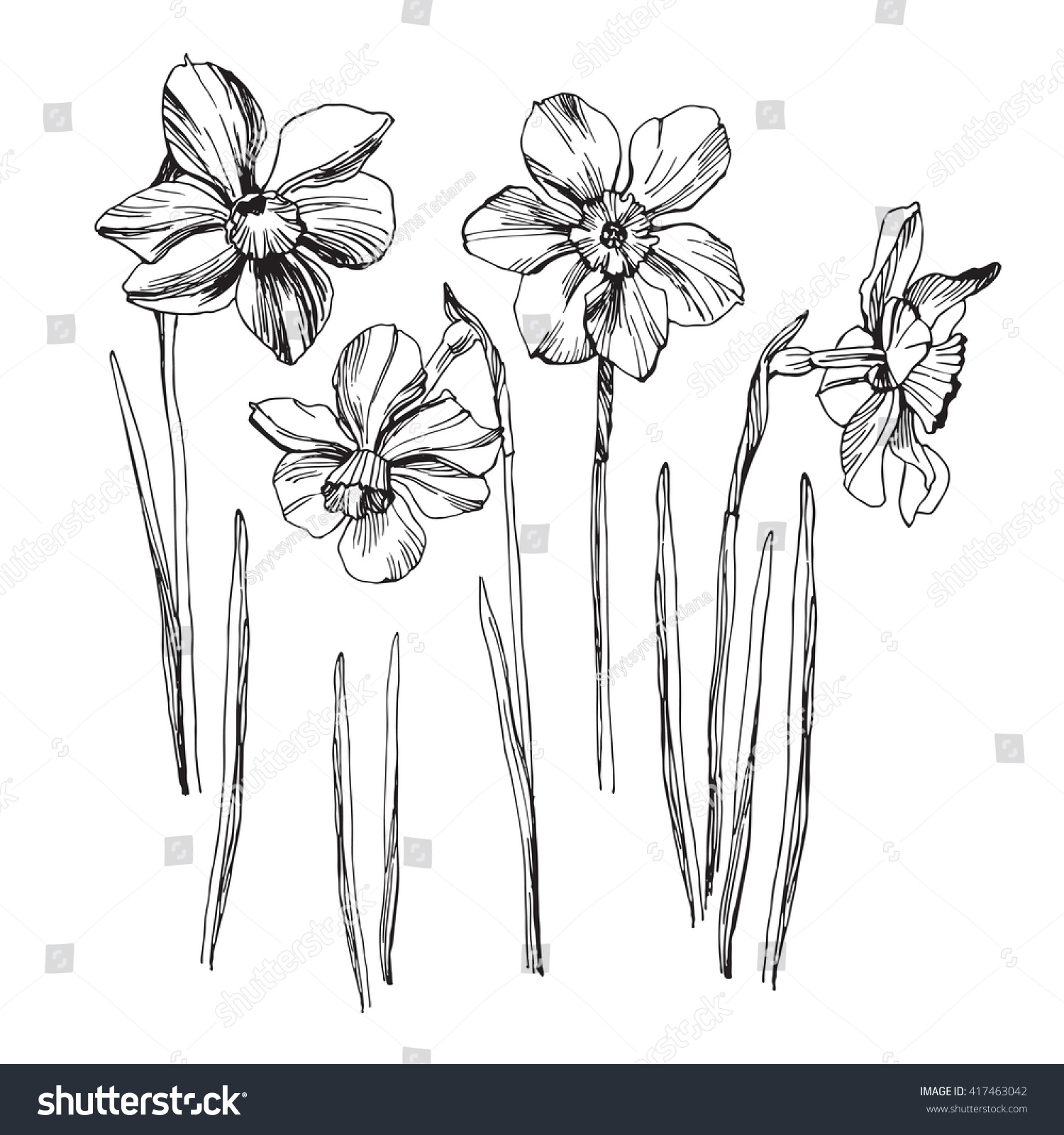 Daffodil Drawing Set Isolated On White Stock Vector (2018) 417463042 ...
