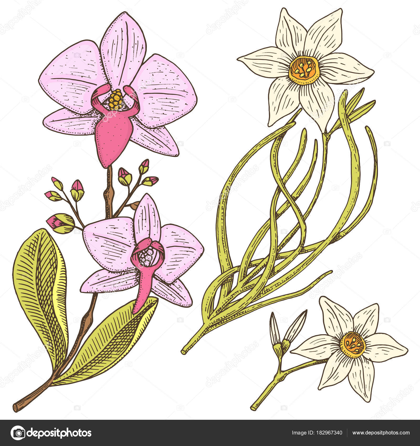 daffodil and orchid with leaves and buds. Wedding flowers in the ...
