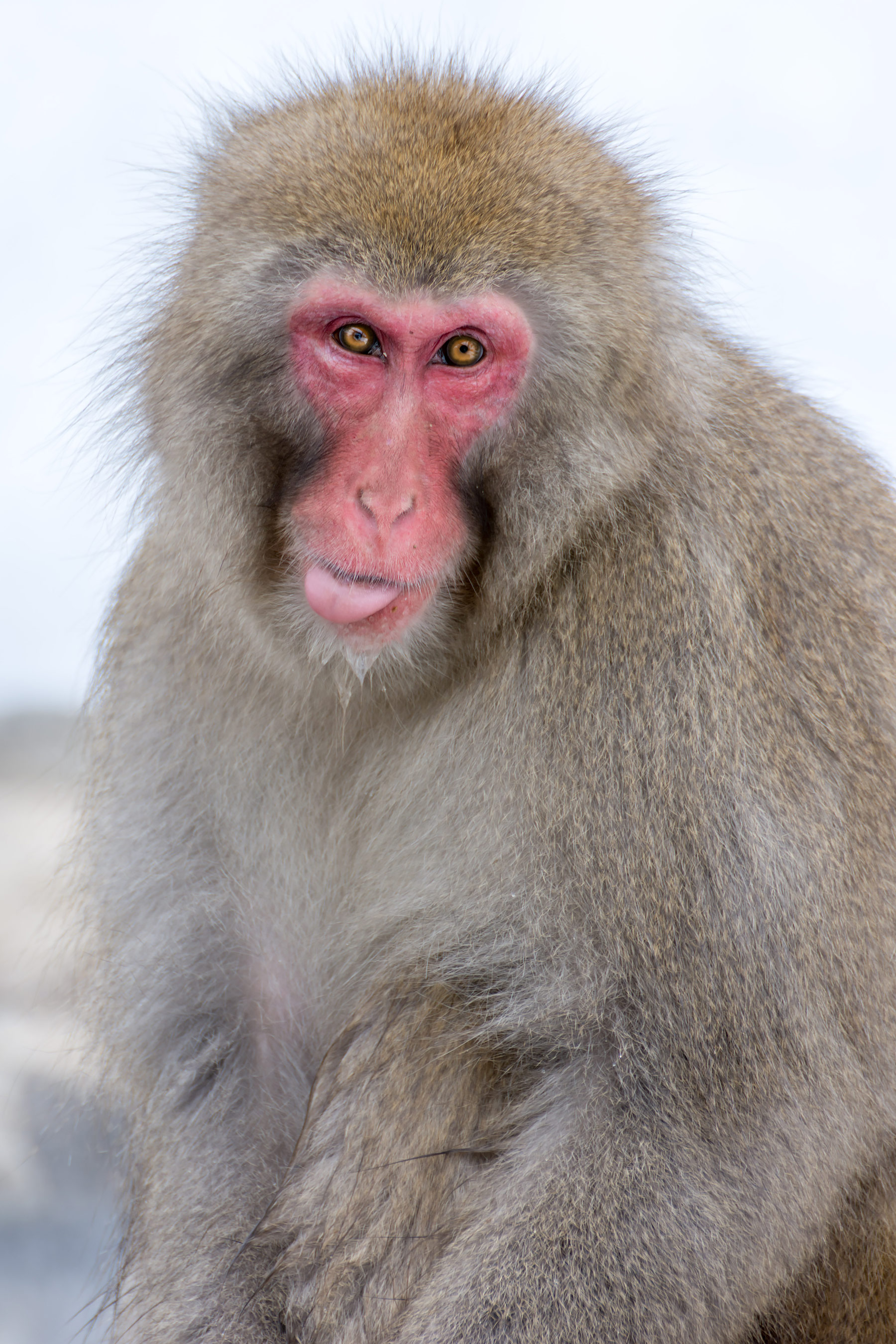 A Guide To Visiting the Jigokudani Snow Monkey Park in Winter ...