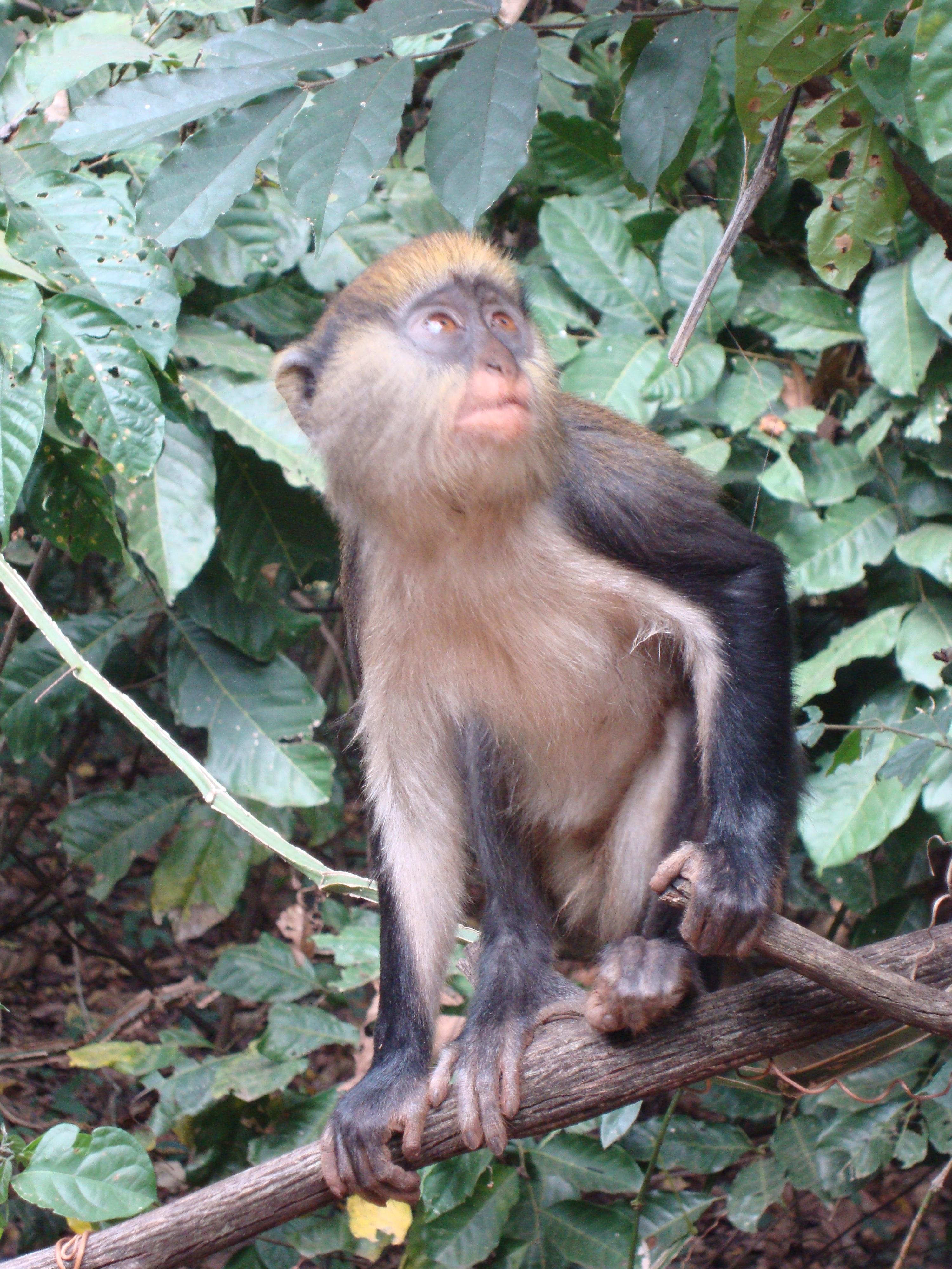 My travels in Ghana so far: January adventures | Steph in Ghana ...
