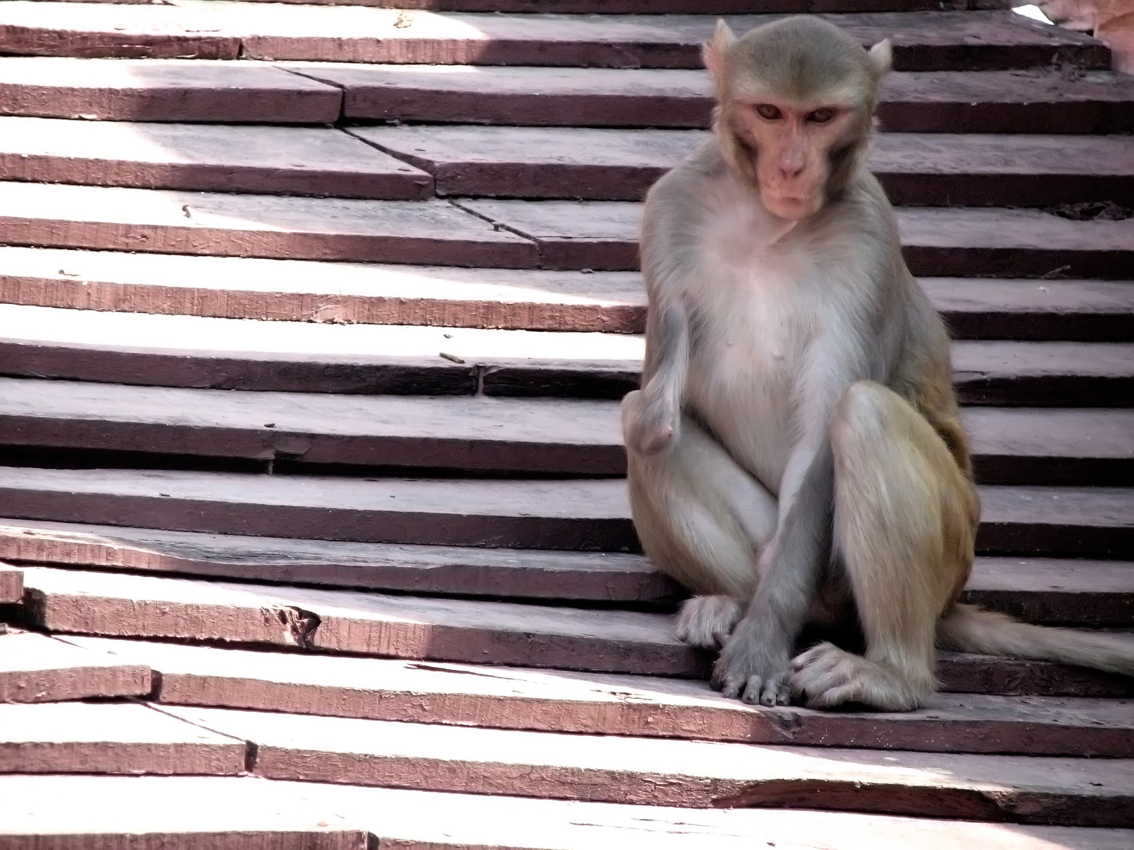 Handicapped Monkey, Animal, Ape, Furry, Handicap, HQ Photo