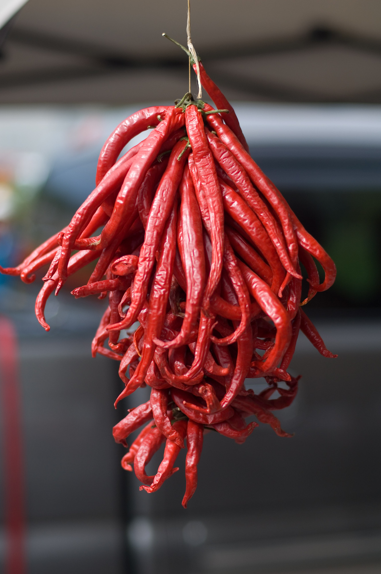 Red Peppers Hanging