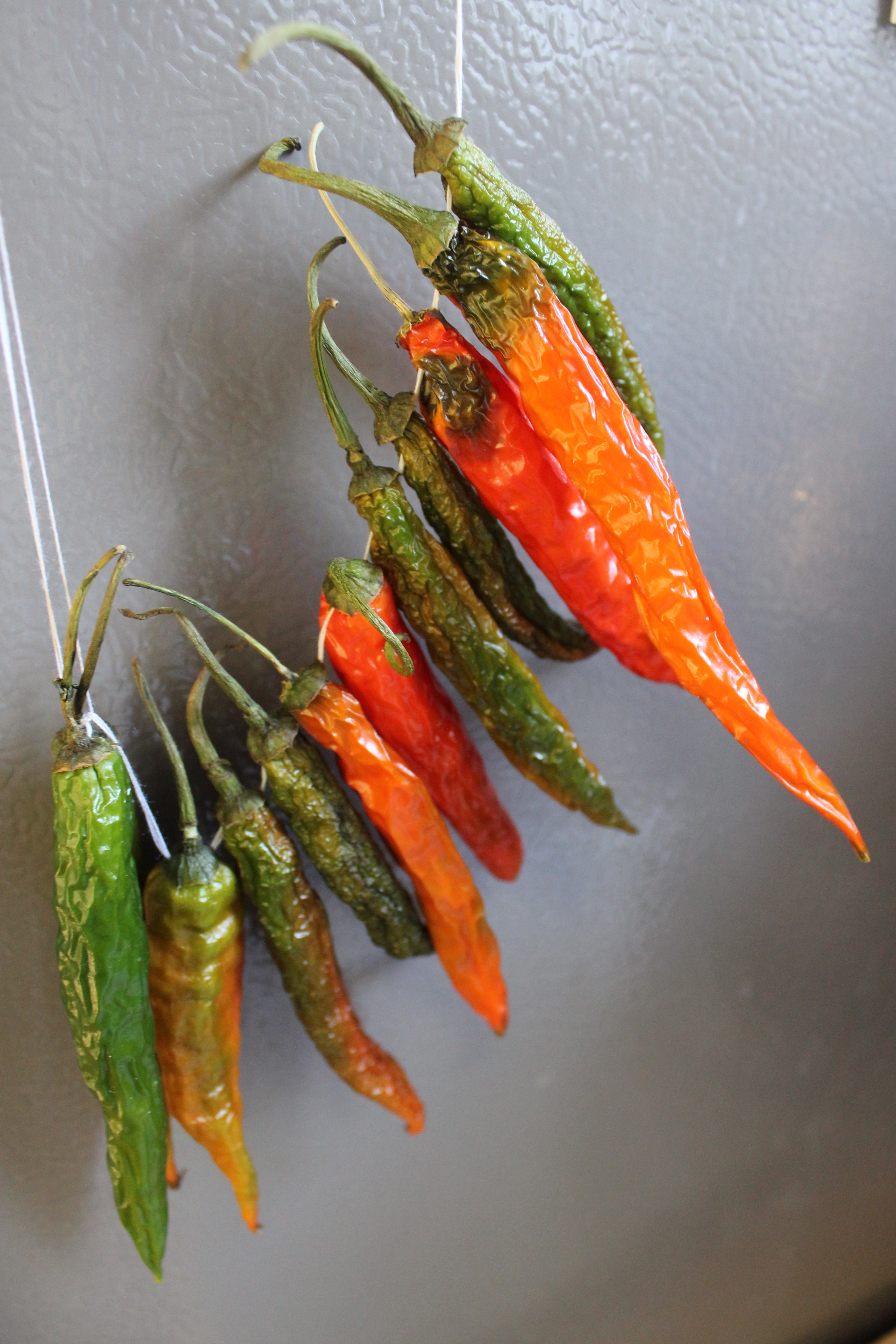drying chili peppers - Google Search   ristras   Pinterest   Pepper ...