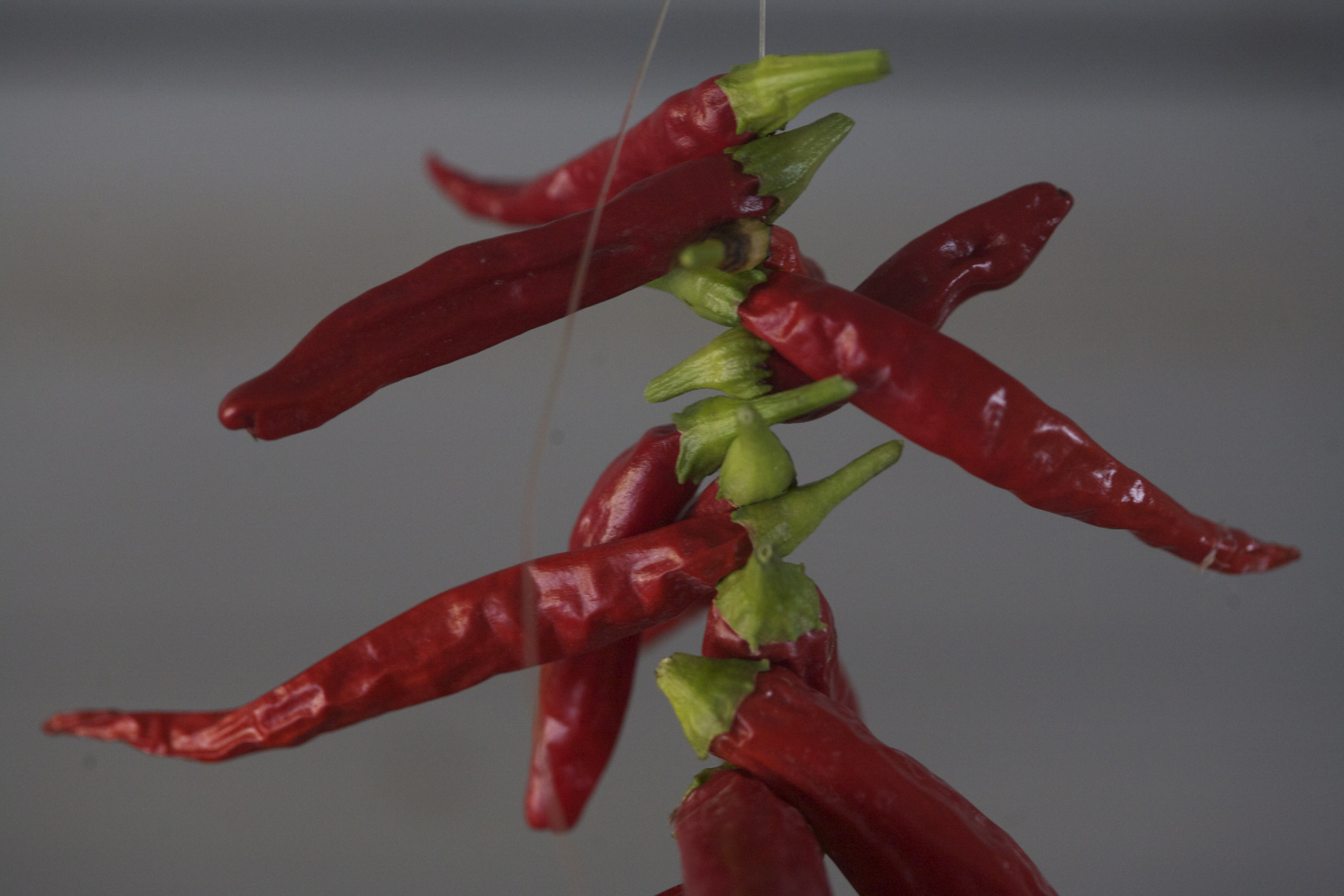 How To Preserve A Whole Season Of Hot Peppers With Virtually No Work ...
