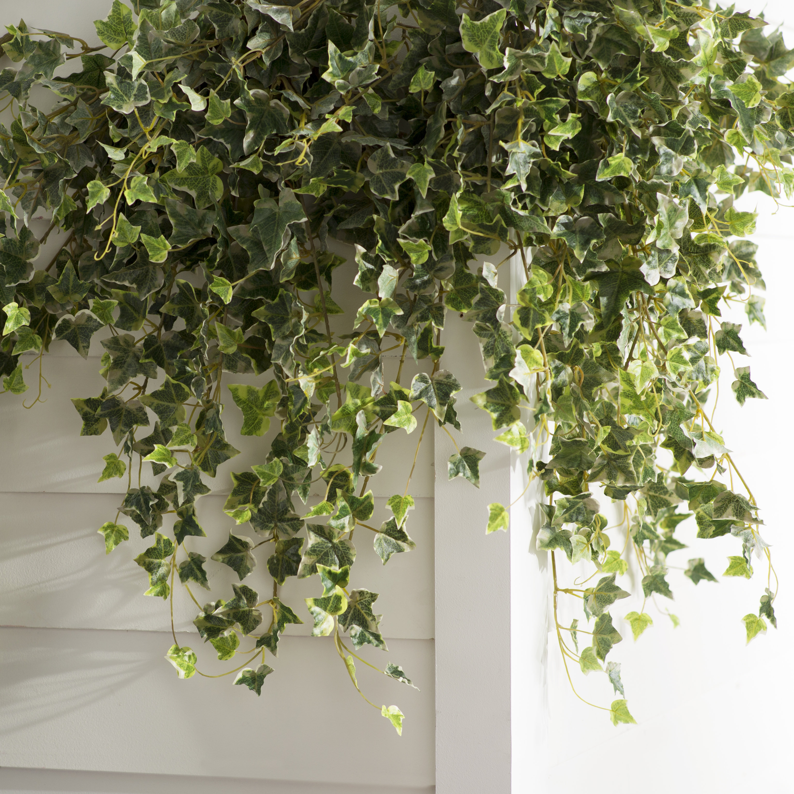 Charlton Home Artificial Variegated Mini Hanging Bush Ivy Plant ...