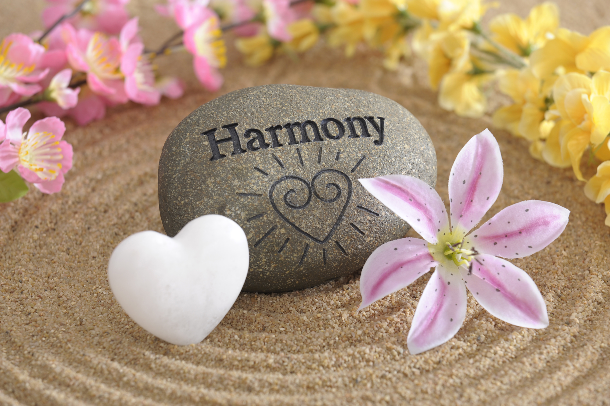 Free photo: Harmony - Artistic, Beautiful, Blooming - Free ...