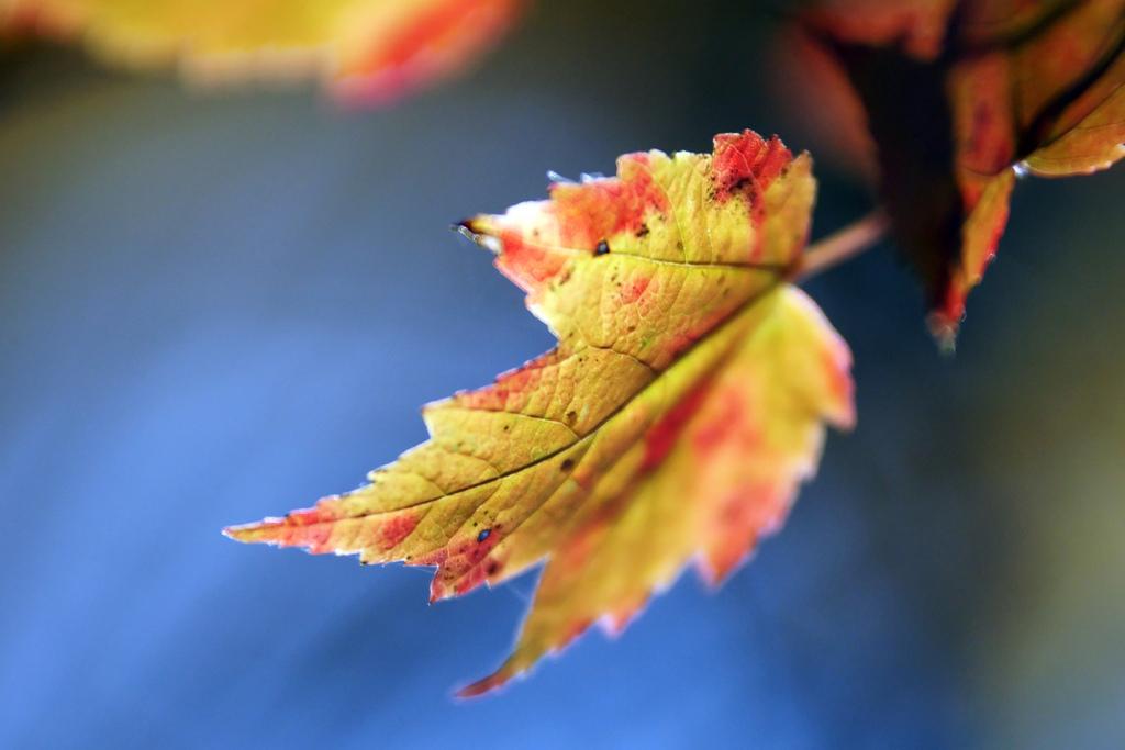 Harvest time, Autumn, Natural, Turning, Tree, HQ Photo