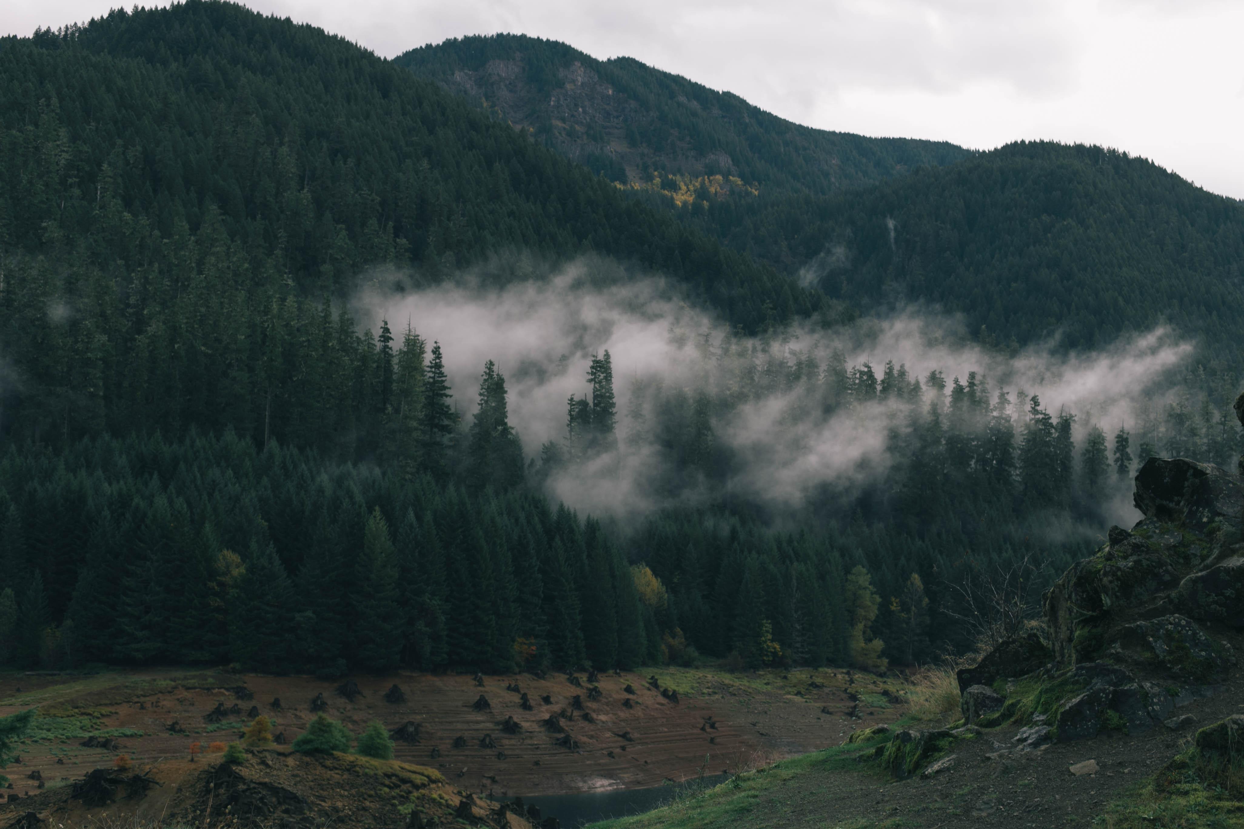 Hazy forest landscape photo