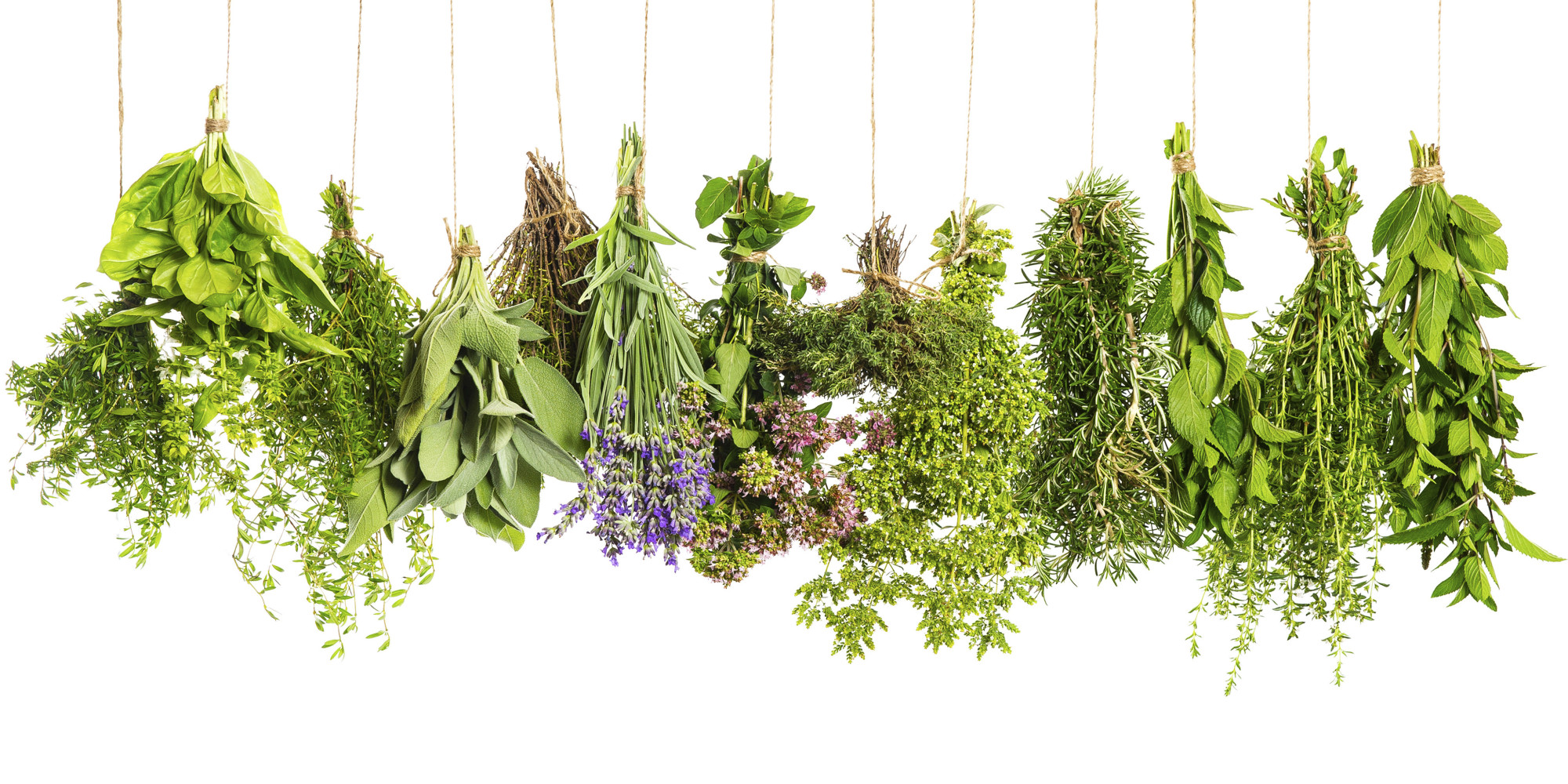 10 Popular Bulgarian Herbs Translated to English | Bulgarian Cooking