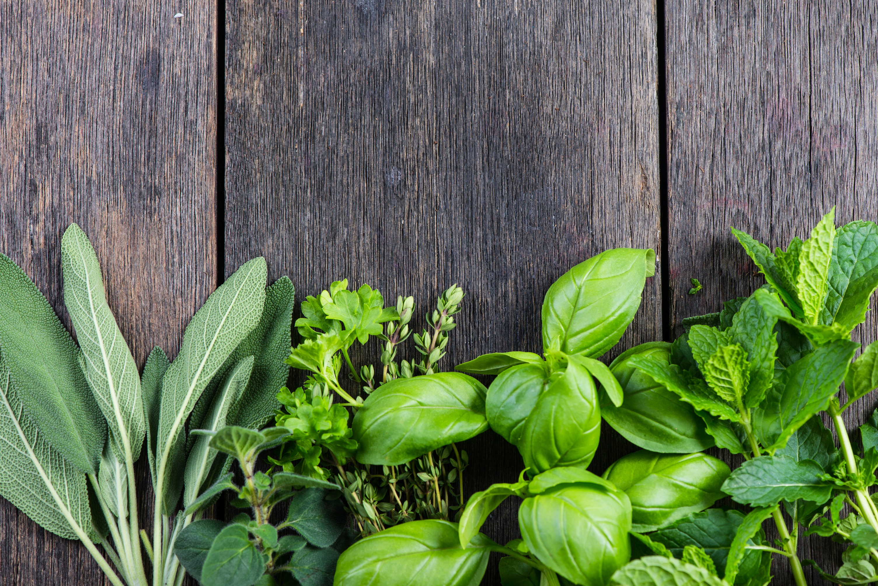 The Best Herbs For Anxiety You Should Use - The Anxiety Guy