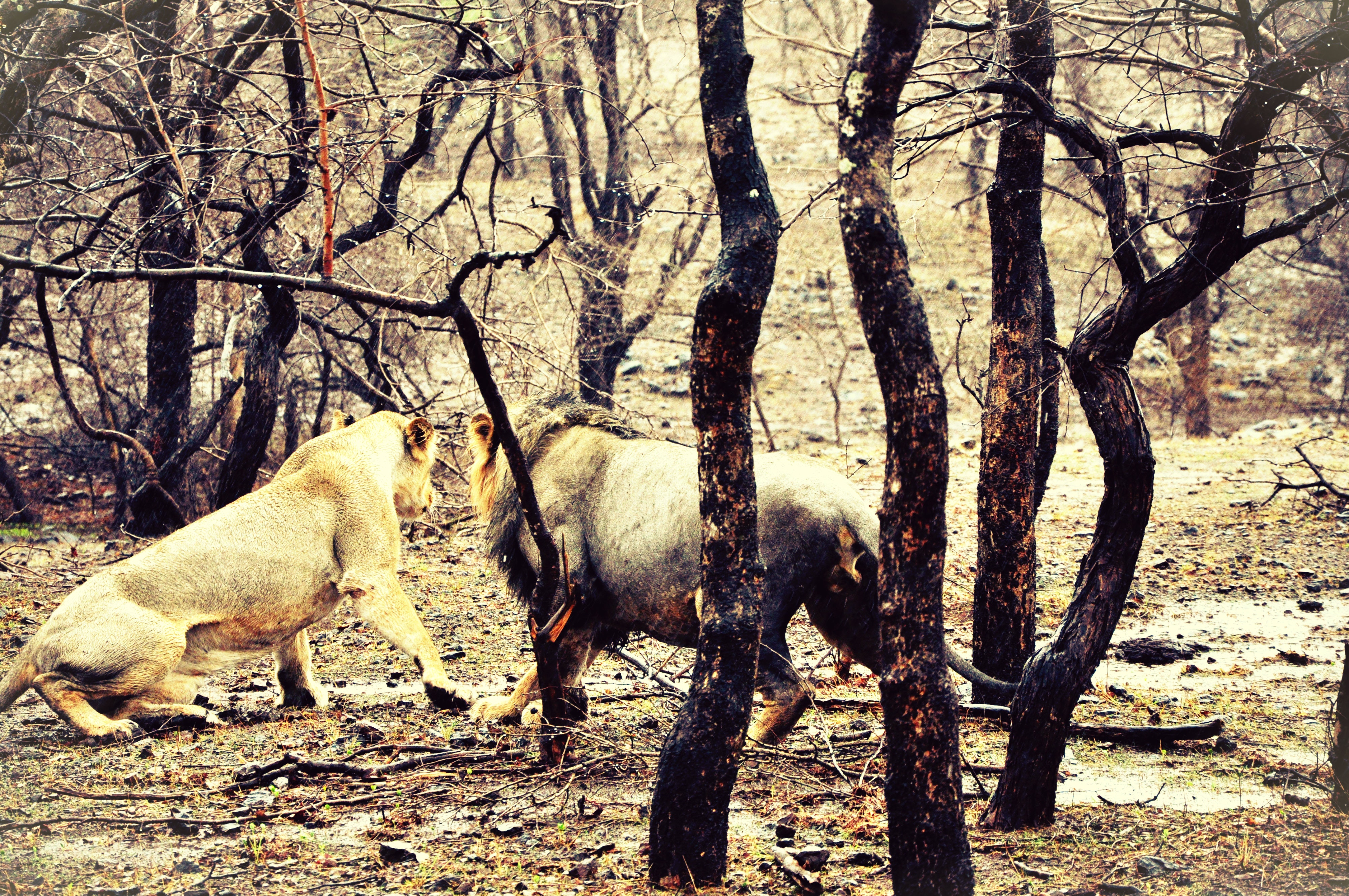 Herd of Bare Tree in Forest, Safari, Season, Park, Outdoors, HQ Photo