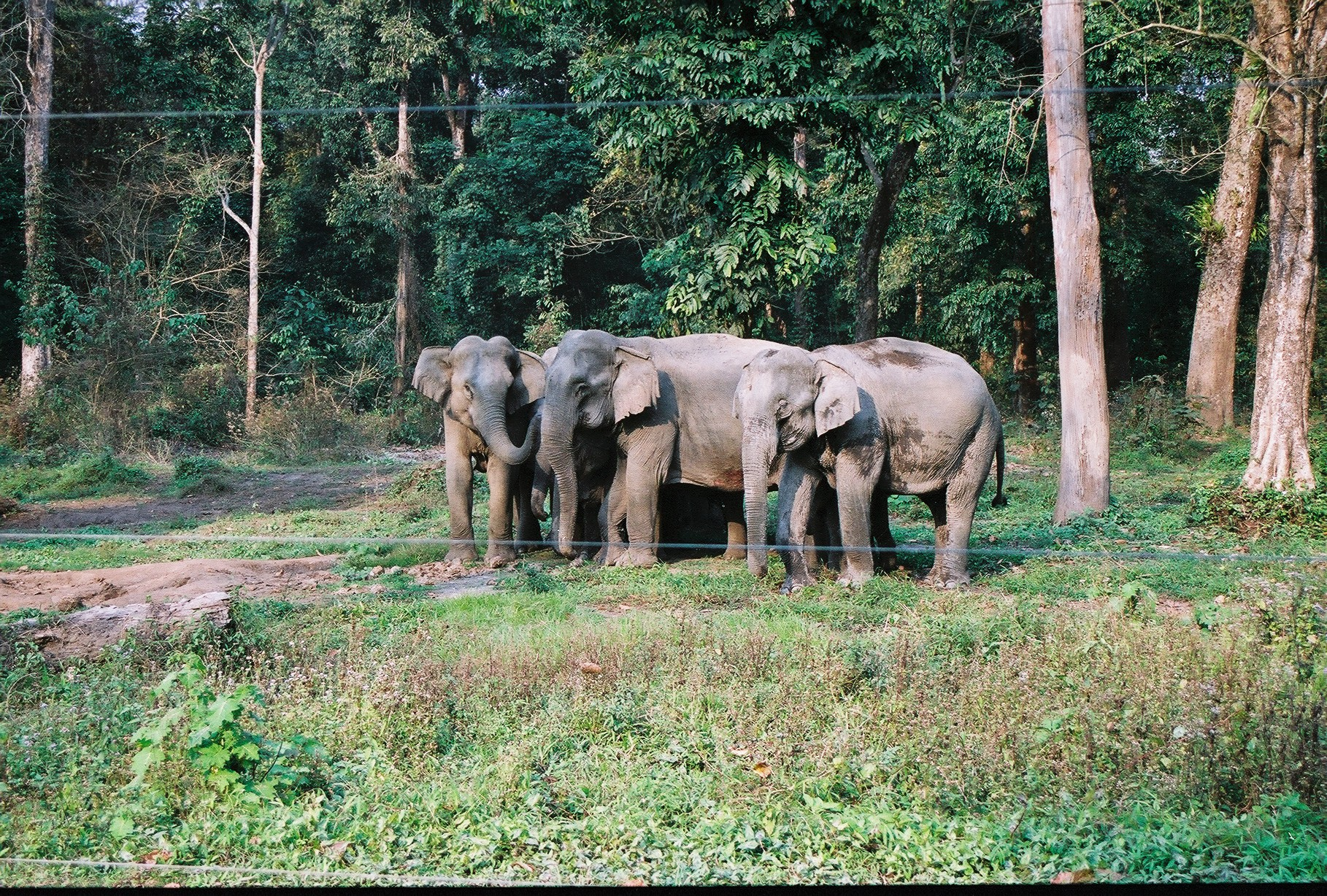 Herd of elephant in buxa tiger reserved photo