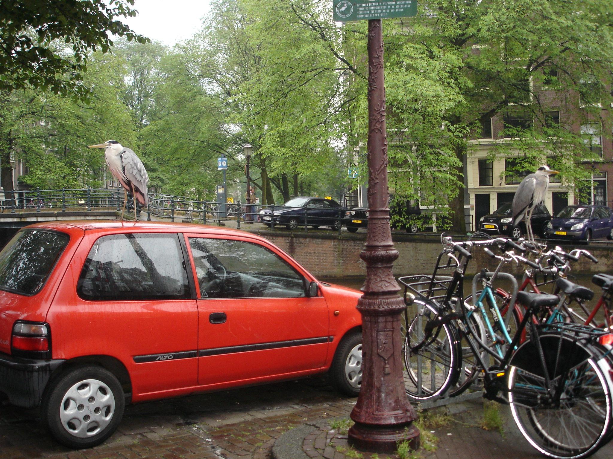 Heron: car or a bike? photo