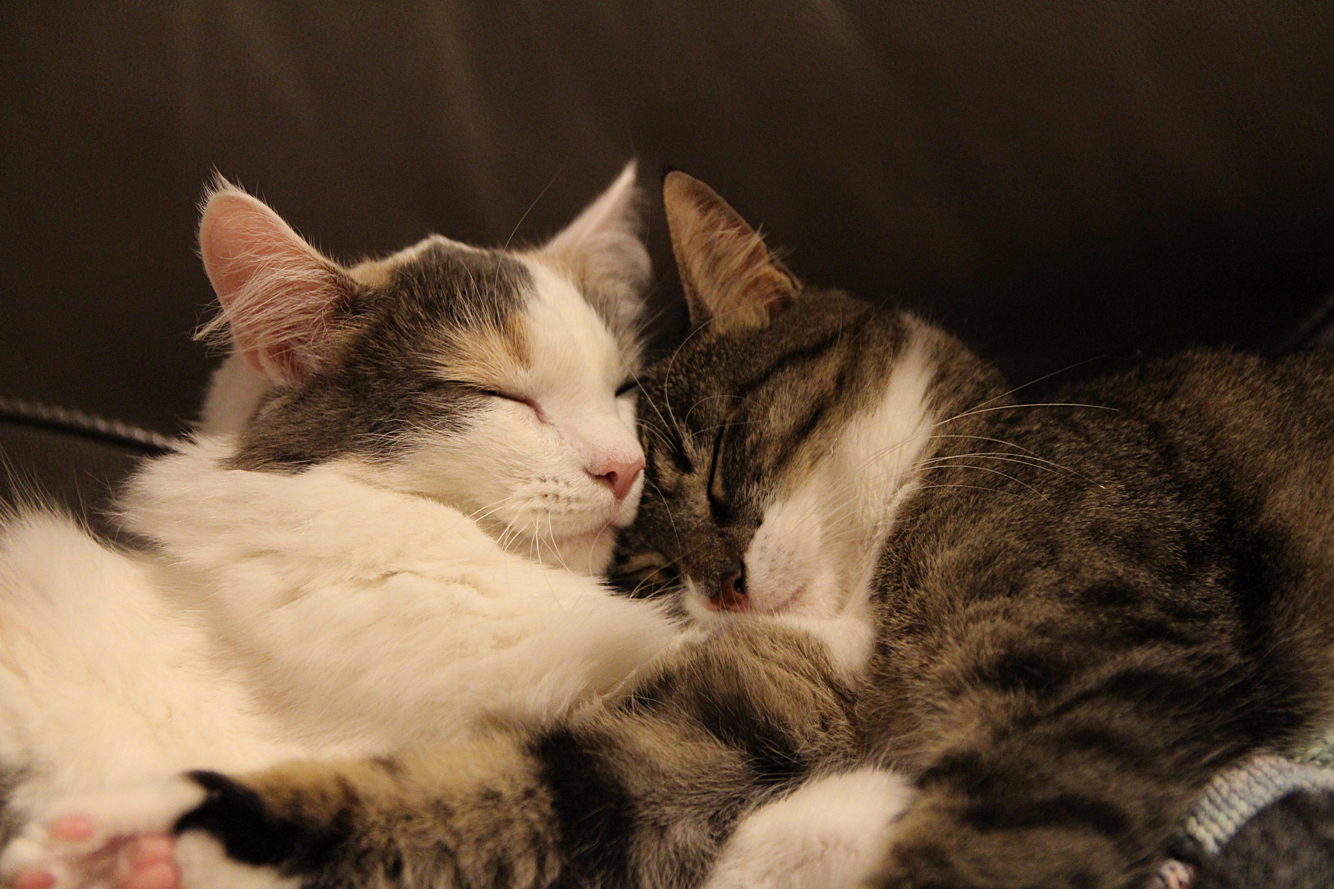 Heyni & Miisa, Kitten, Kissa, Katze, Katt, HQ Photo