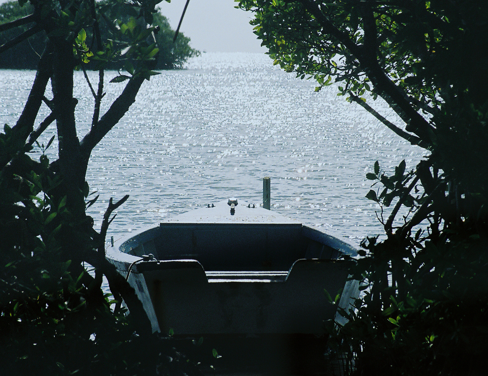 Hidden launch, Boat, Hidden, Lake, Mangrove, HQ Photo
