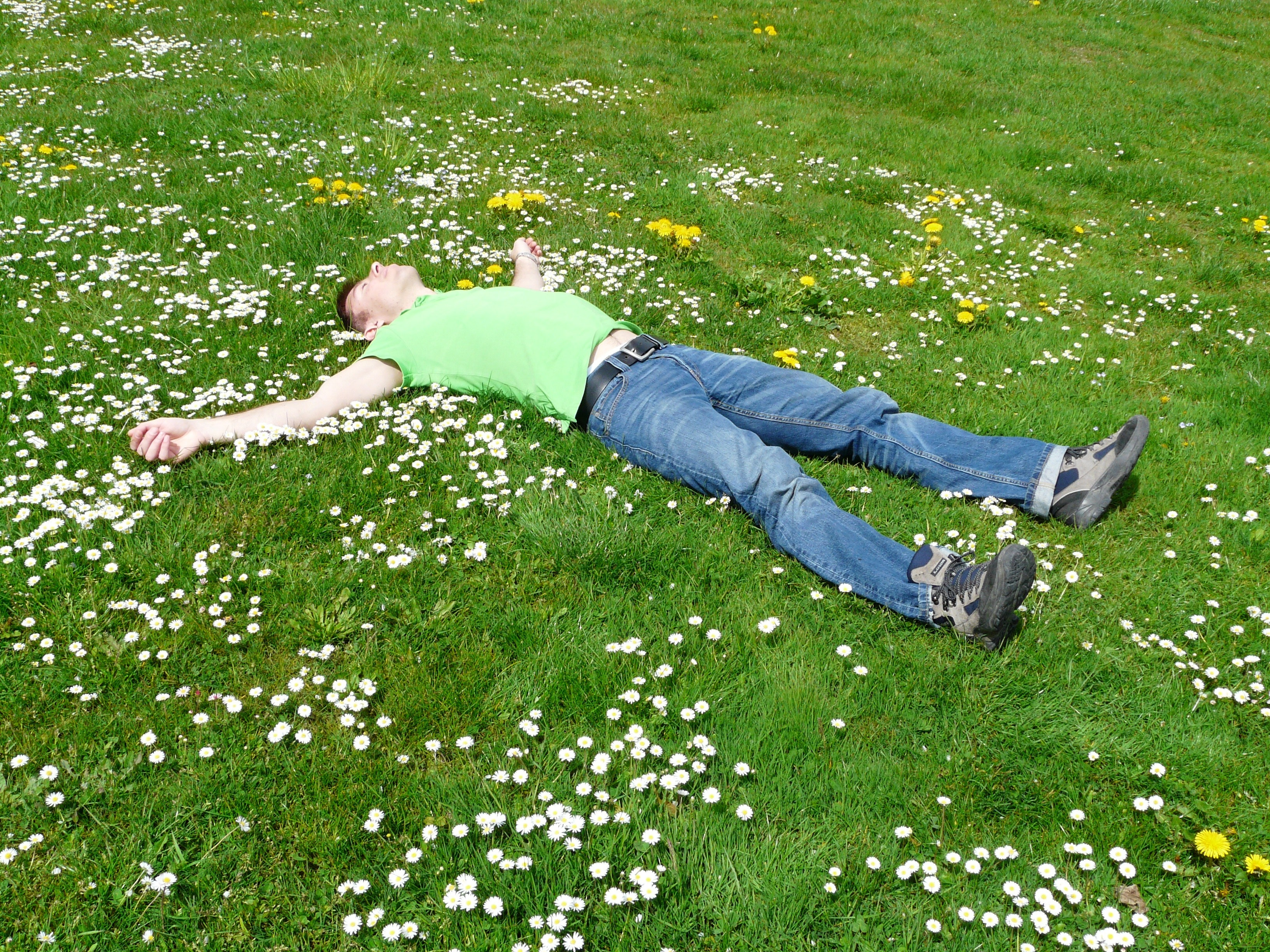 High Angle View of Lying Down on Grass, Bloom, Looking up, Man, Meadow, HQ Photo