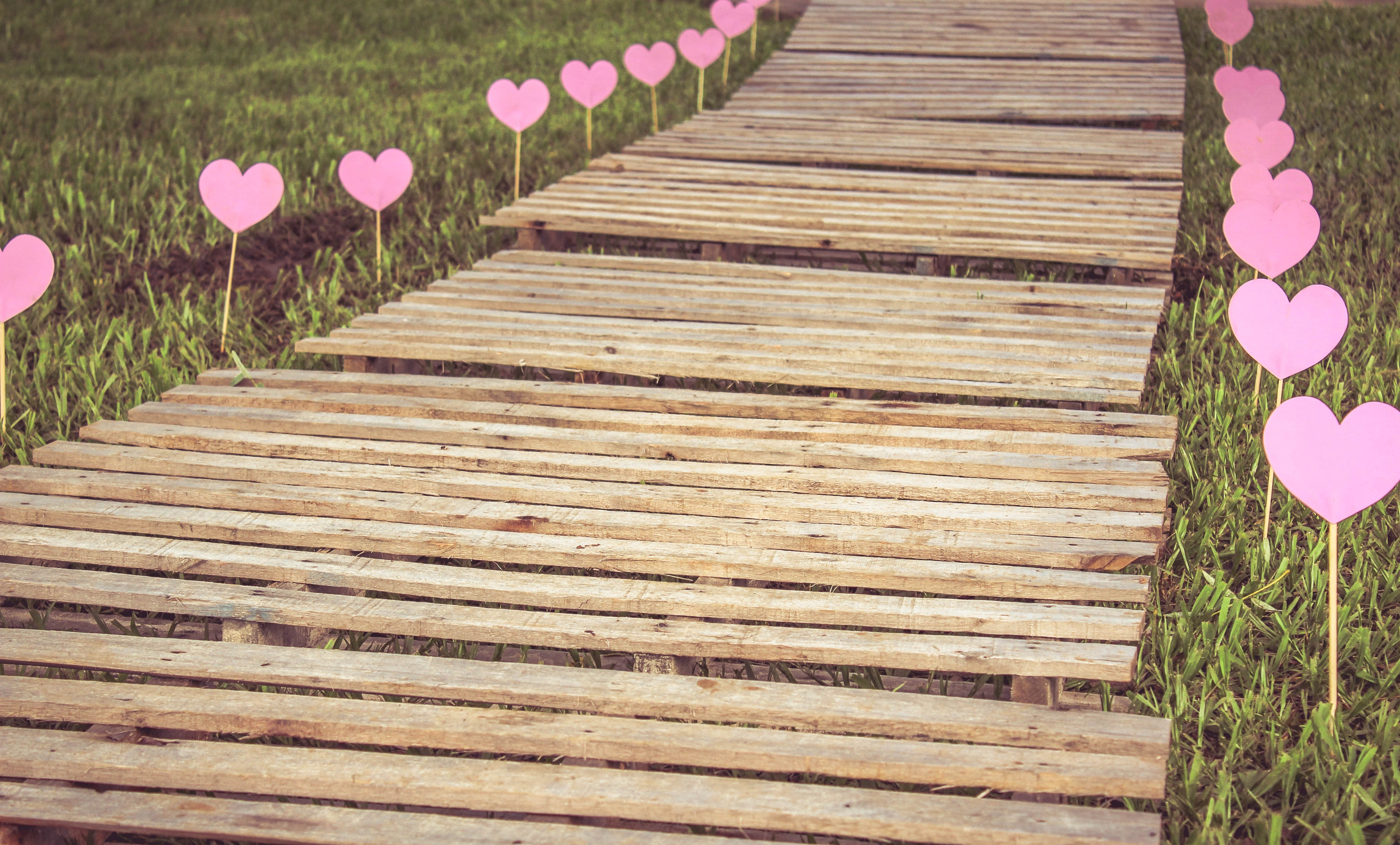 High Angle View of Plants on Wood, Decoration, Design, Hearts, Love, HQ Photo