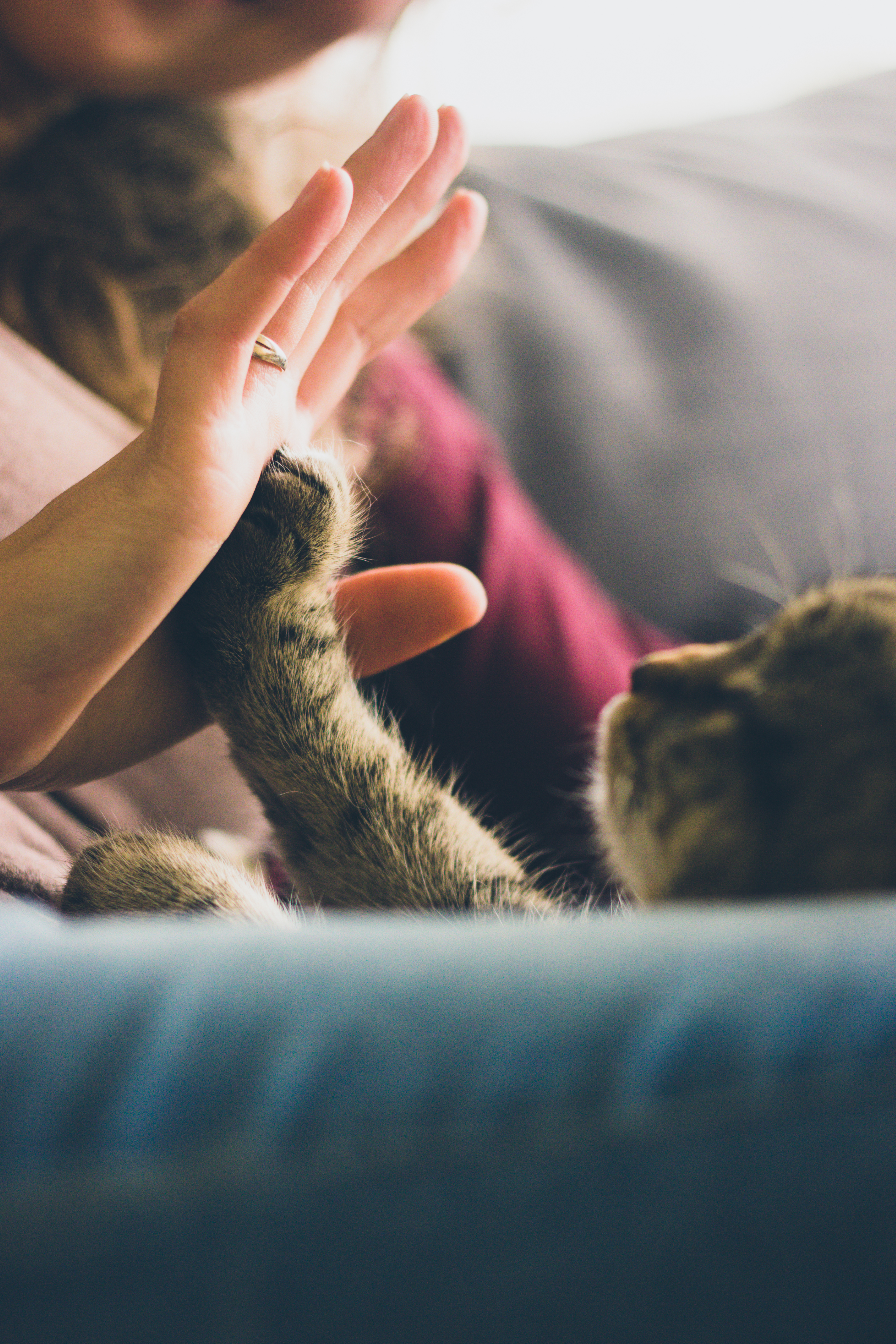 High Five with Cat, Animal, Cat, Feline, Fingers, HQ Photo