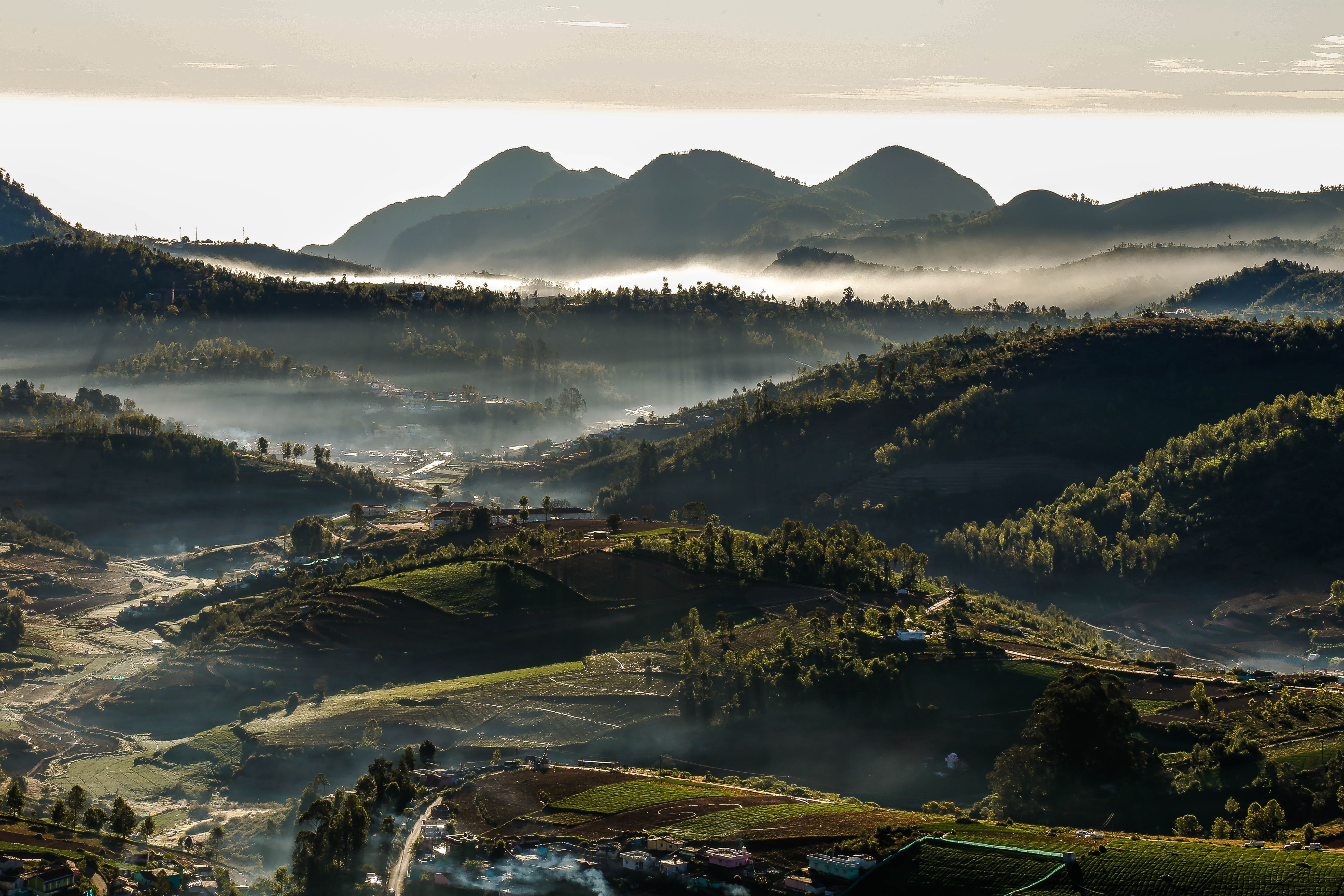 Hills covered by forest and fogs photo