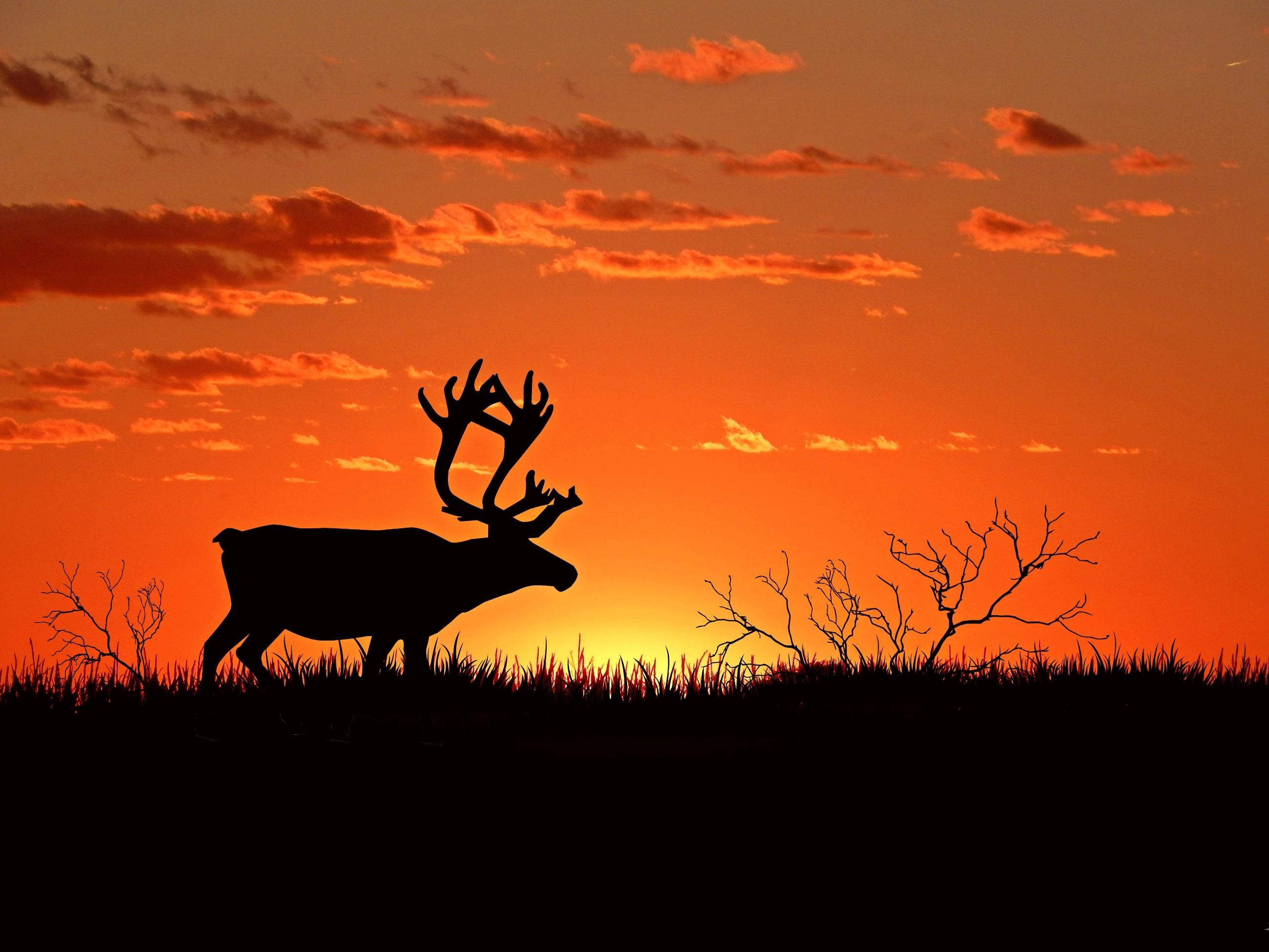 Hirsch, Sunset, Wild, Nature, Dark, HQ Photo