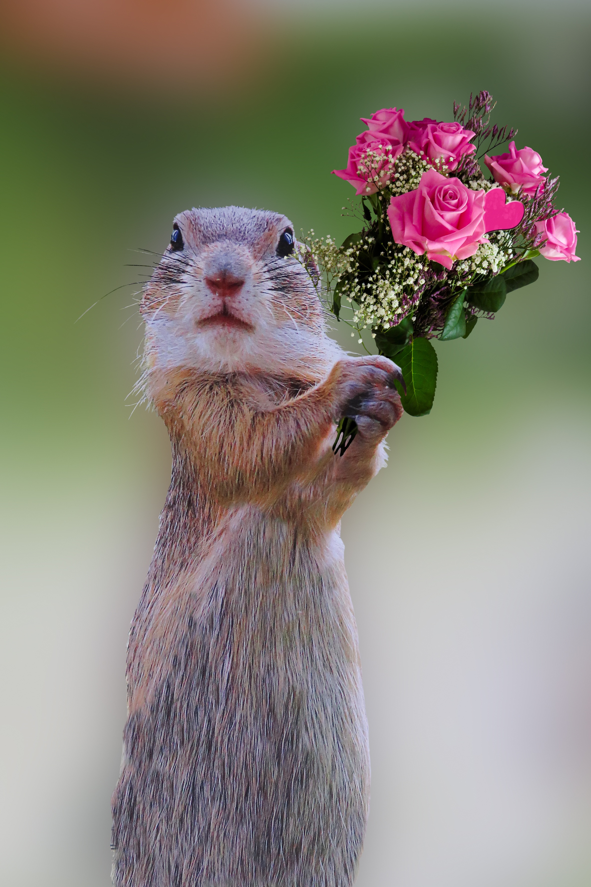 Holding Roses, Mouse, Nature, Wild, Hold, HQ Photo