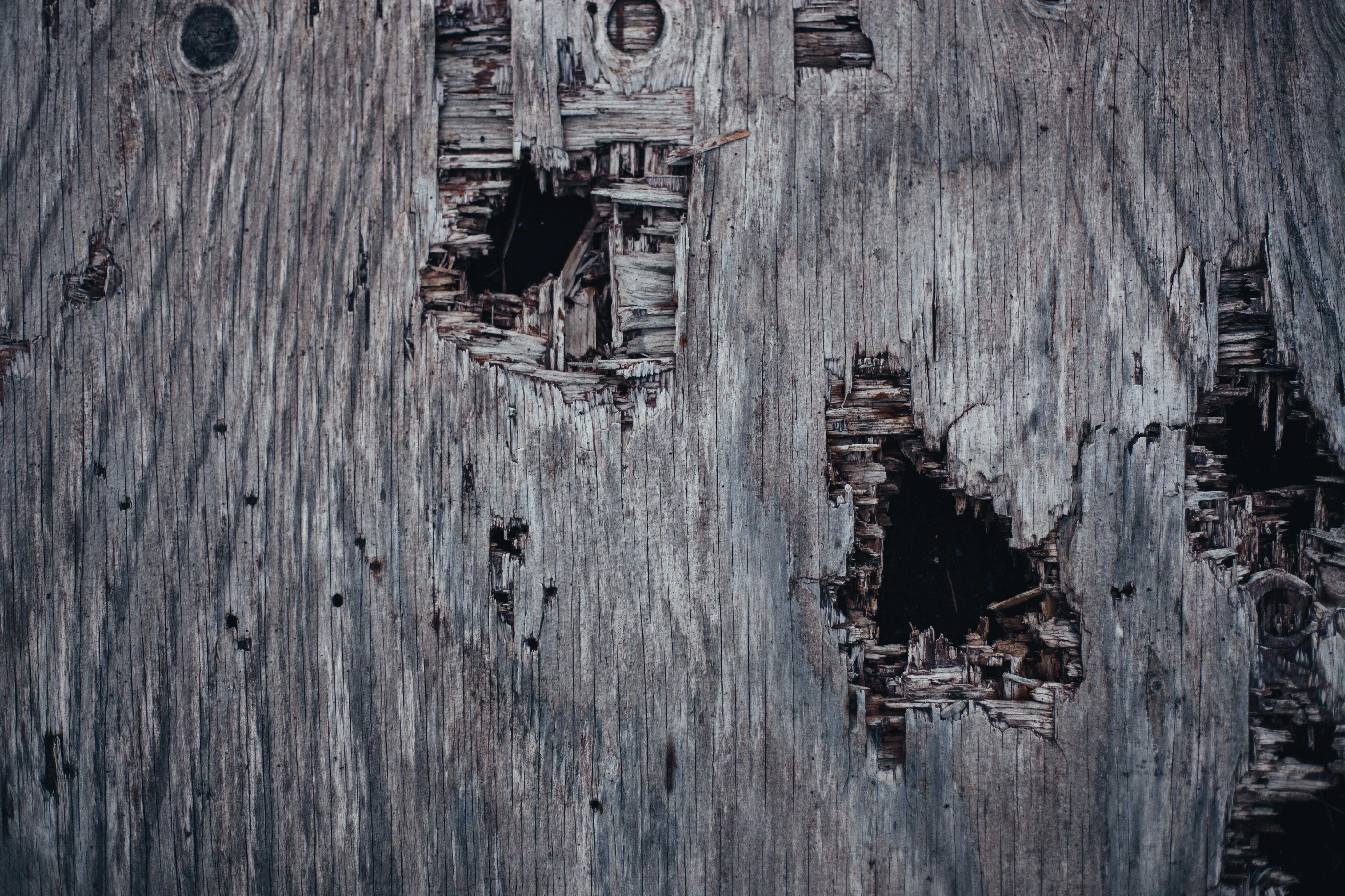 Holed Grunge Wood Texture, Damaged, Grunge, Grungy, Holes, HQ Photo