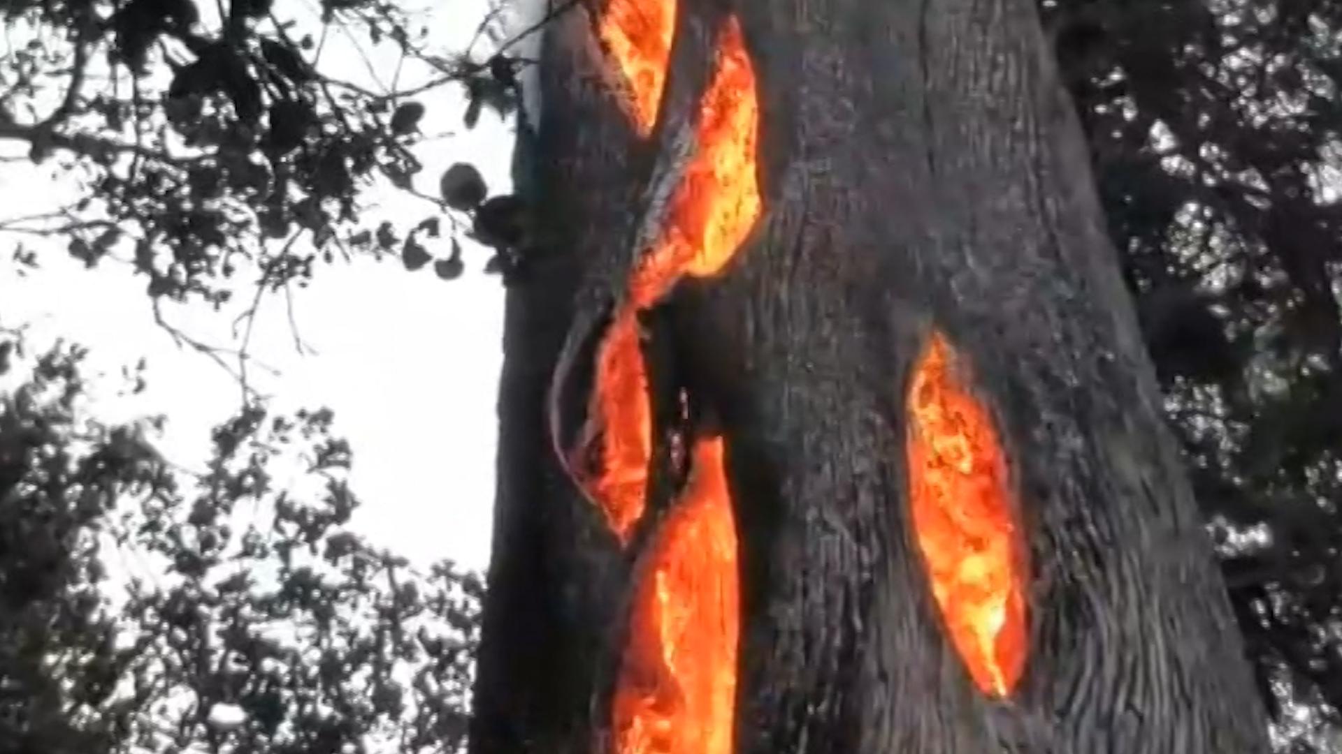 Watch as fire burns inside hollow tree - CNN Video