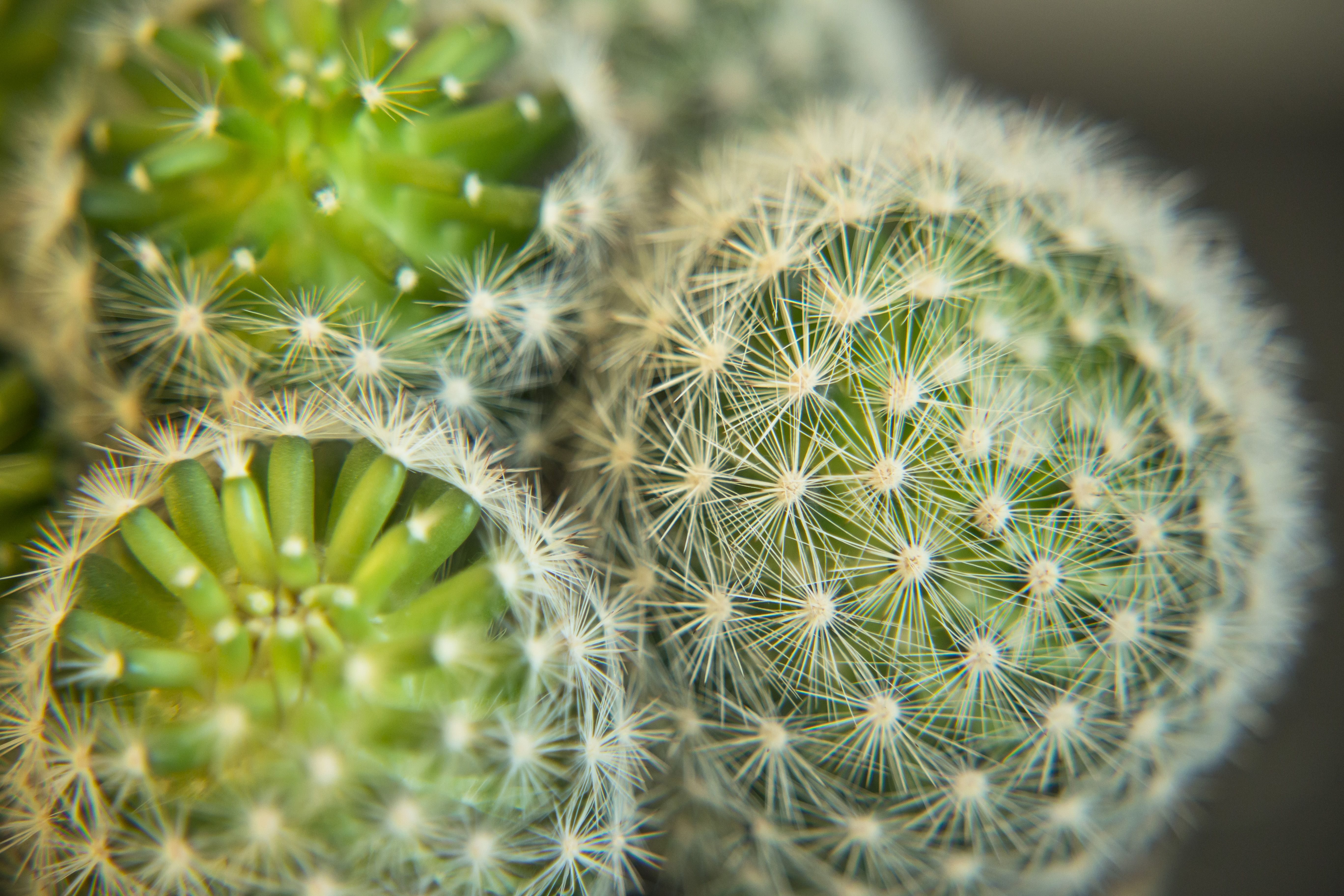Home cactus photo